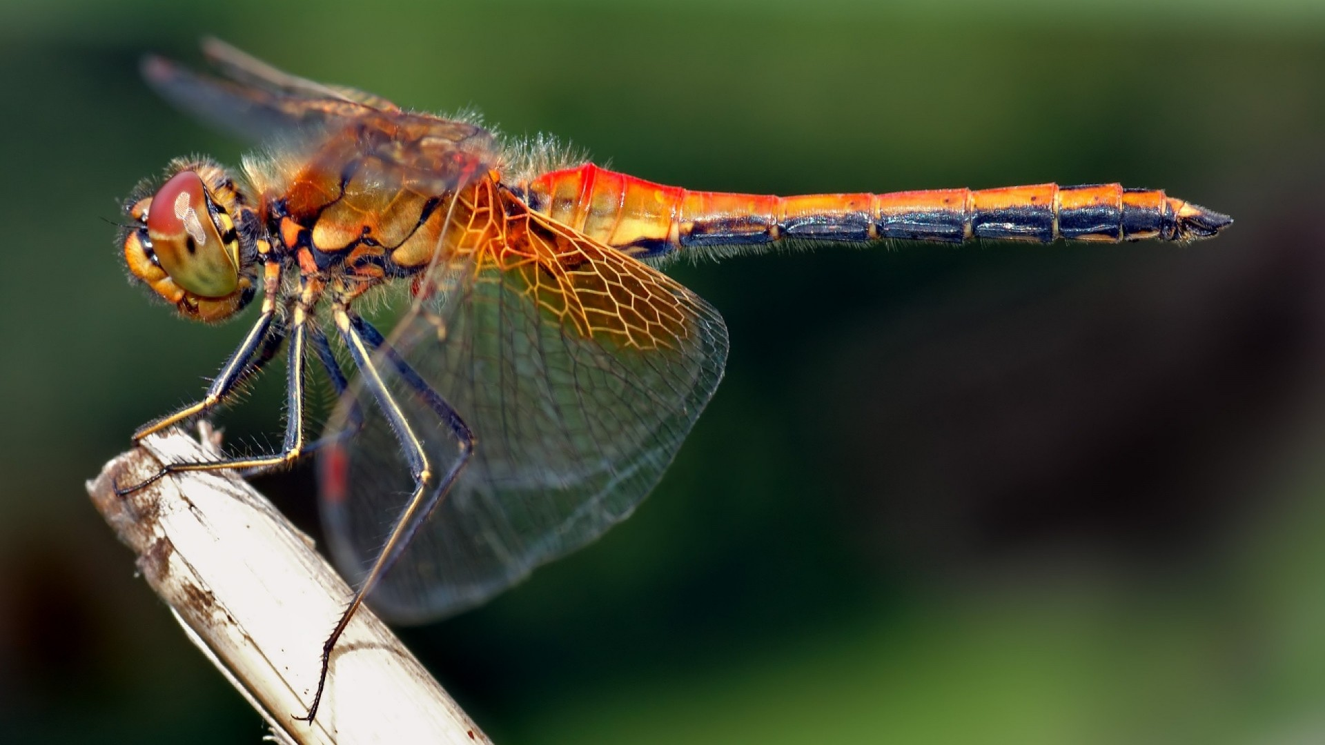 Res: 1920x1080, Download now full hd wallpaper dragonfly stick wing insect variegated ...