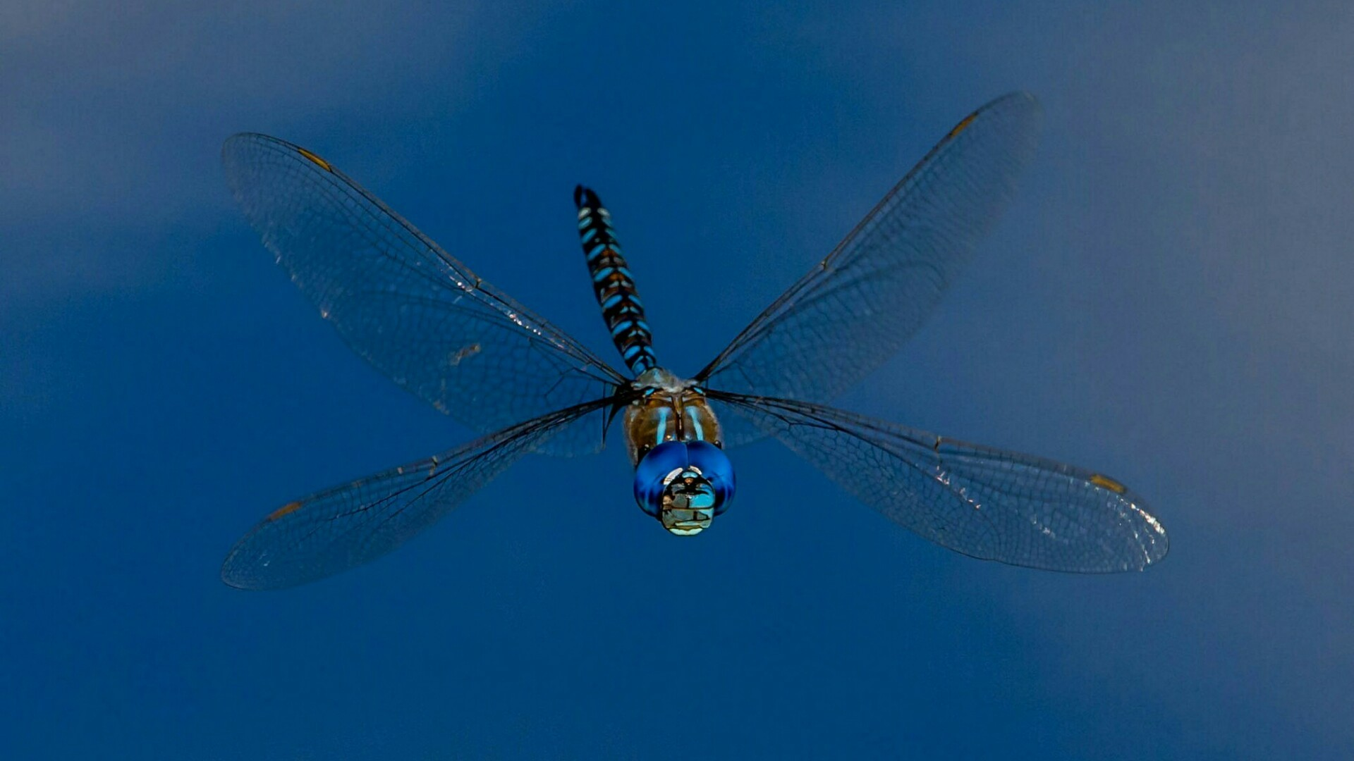 Res: 1920x1080, Dragonfly In The Blue Sky - Macro Photography Wallpaper | Wallpaper Studio  10 | Tens of thousands HD and UltraHD wallpapers for Android, Windows and  Xbox