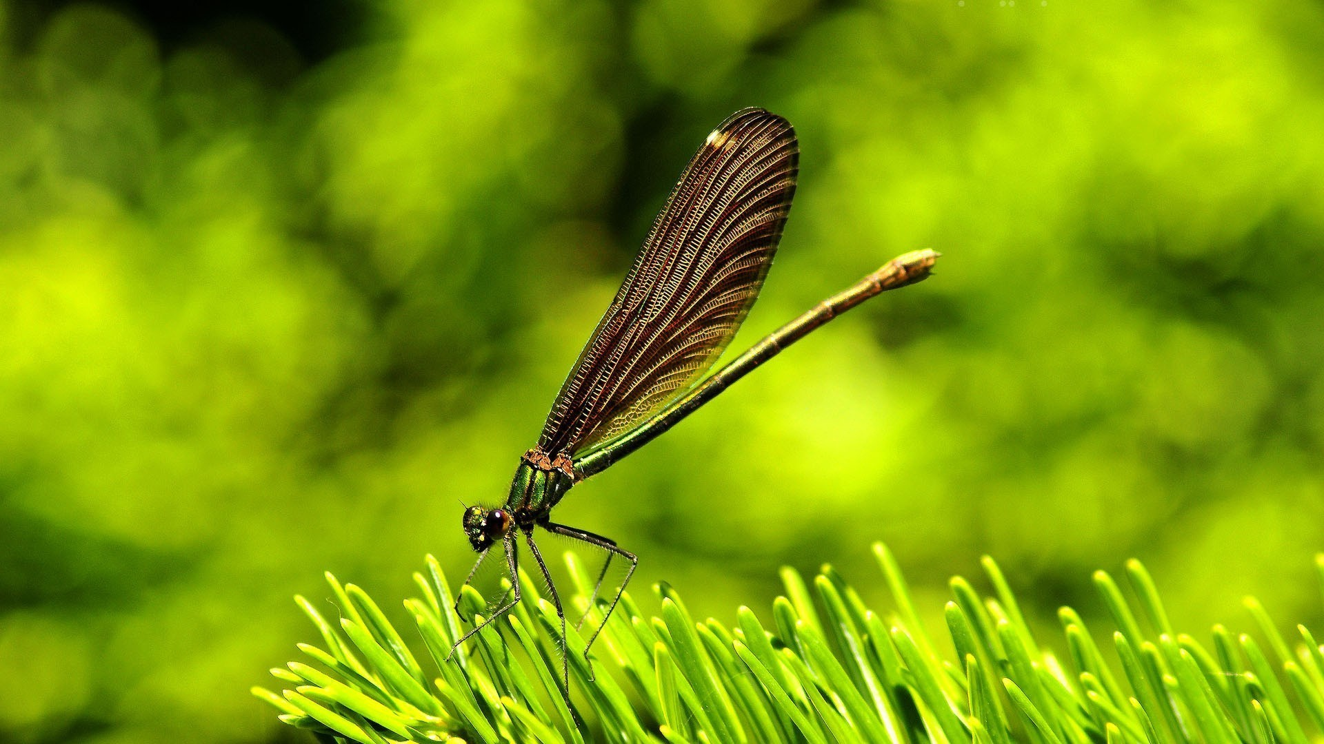 Res: 1920x1080, Dragonflies green insects nature wallpaper