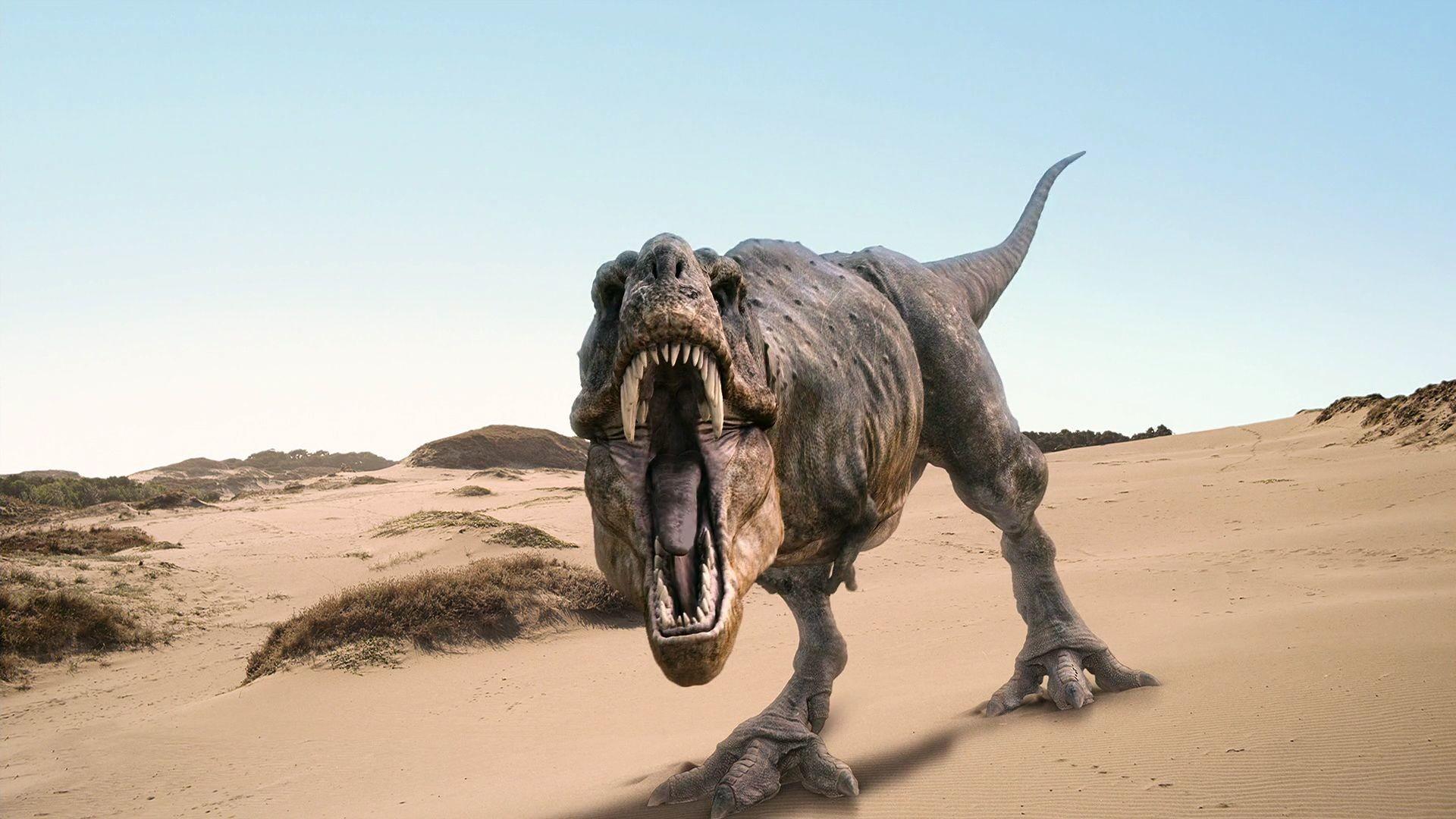 Res: 1920x1080, T-Rex Dinosaurs HD Desktop Wallpaper
