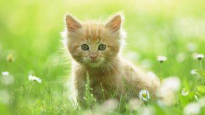 Cute Kitten wallpapers