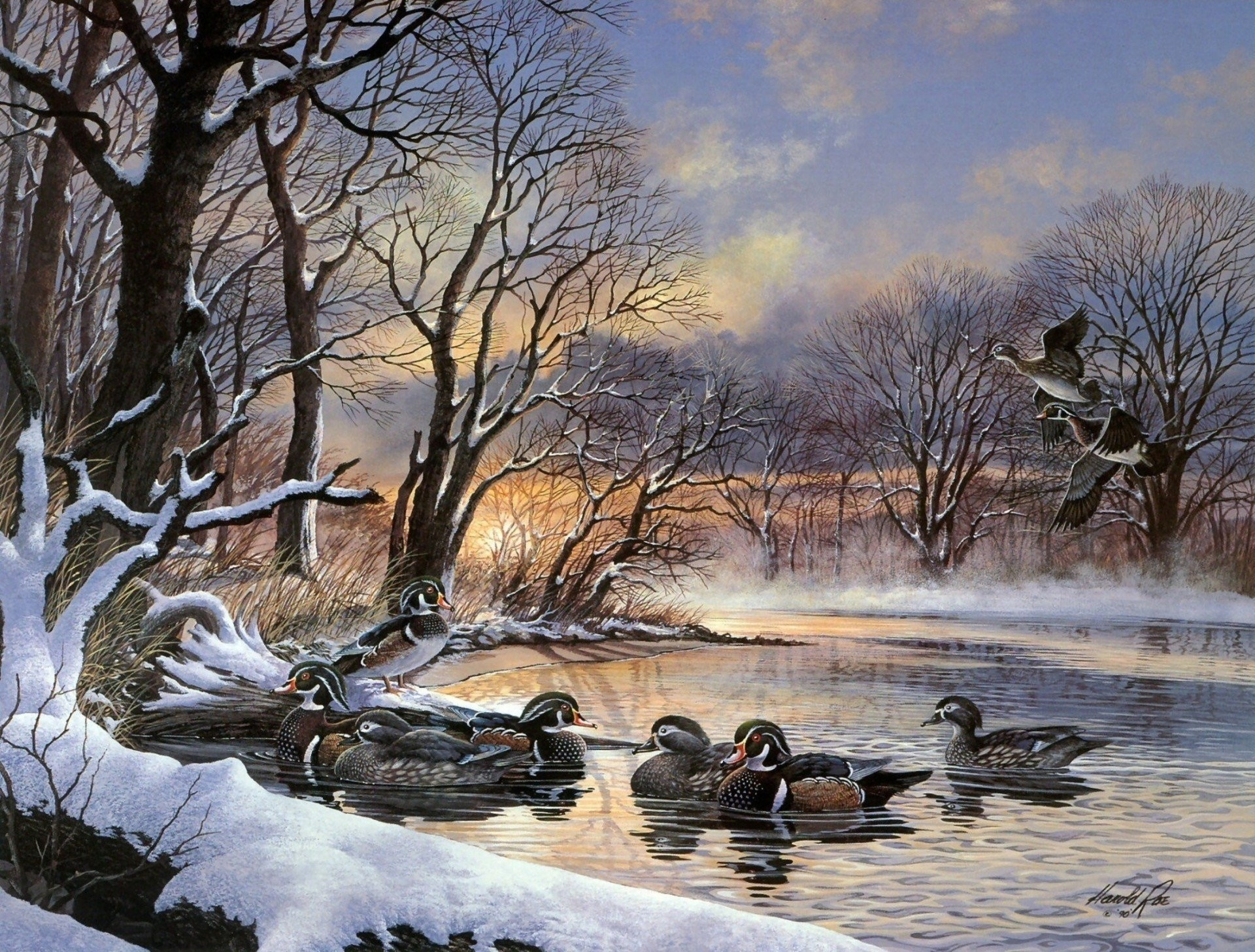 Res: 1920x1457, a flock of ducks ninja pattern sunset lake central park winter