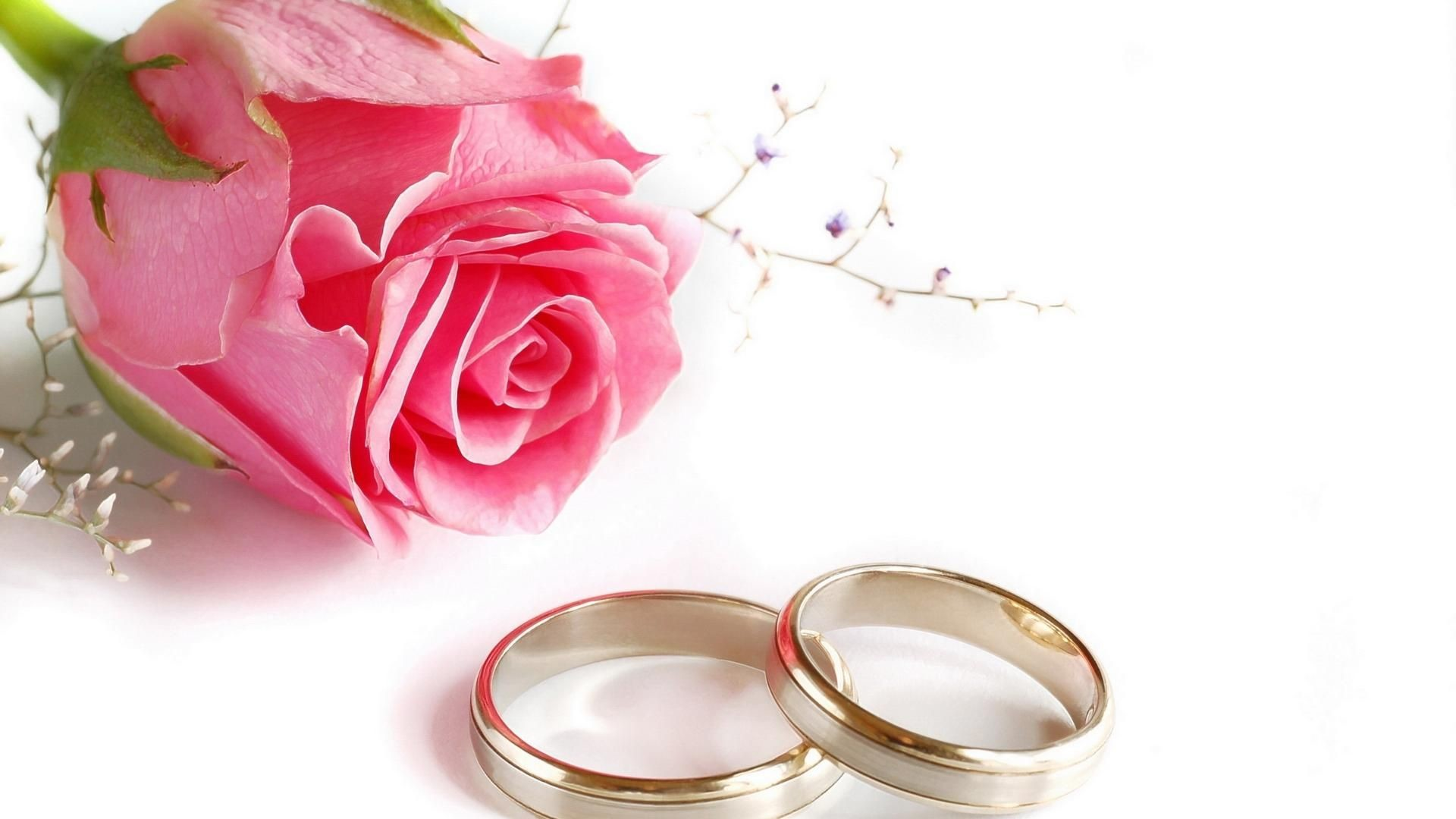 Res: 1920x1080, Wedding Rings Rose Flower HD Wallpaper