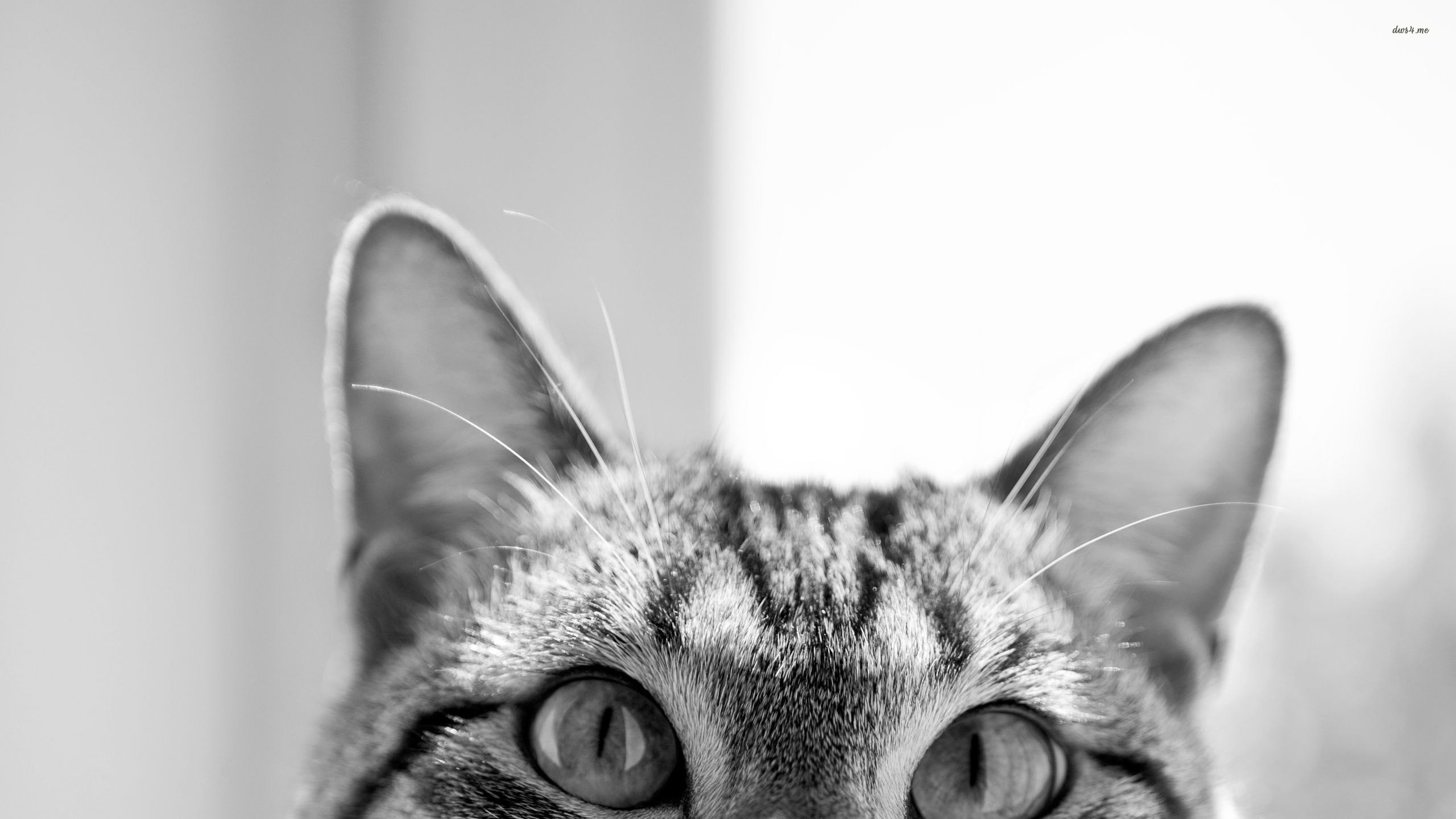 Res: 2560x1440, Hipster Cat backgrounds