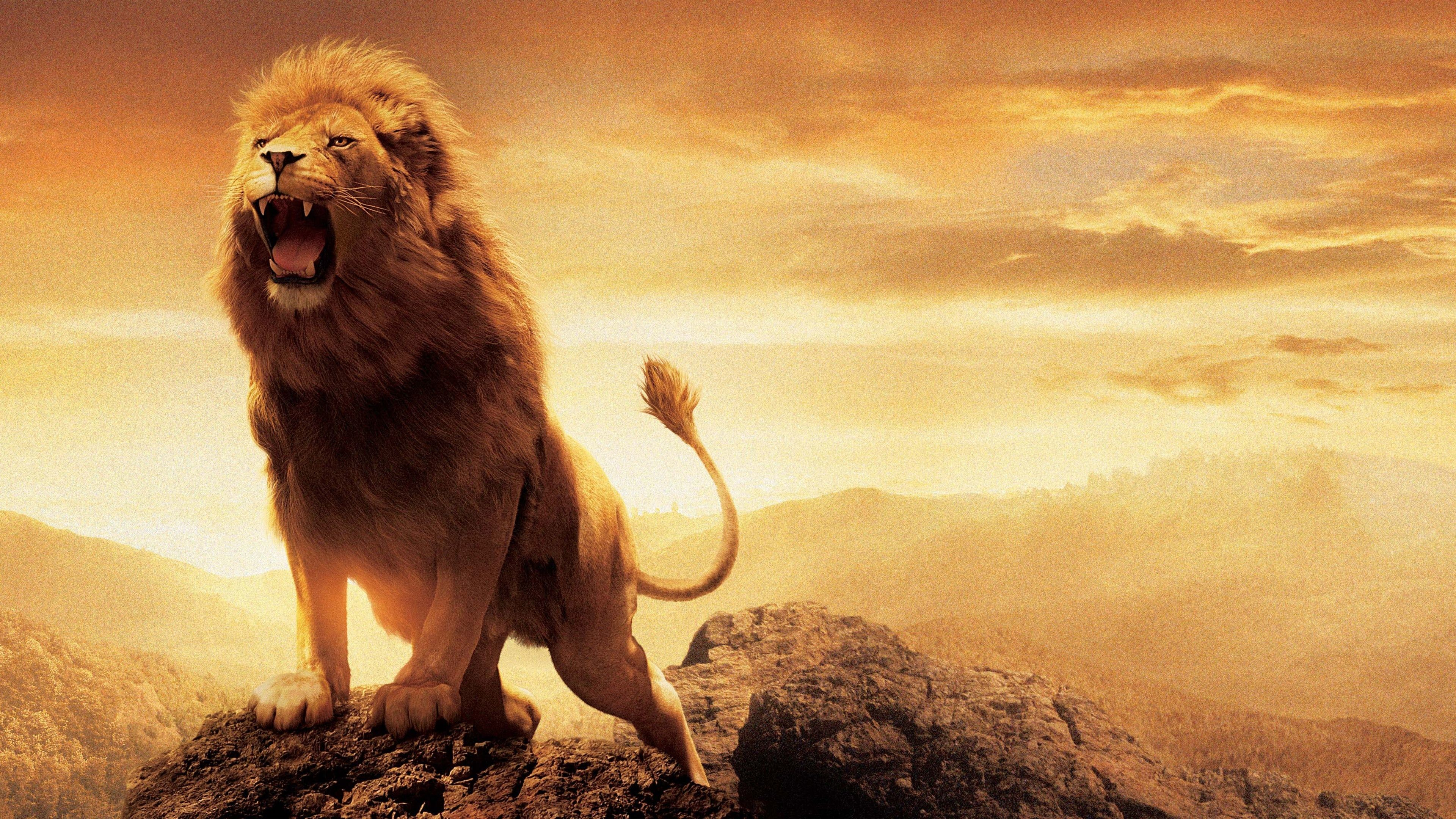 Res: 3840x2160, Narnia Lion Aslan Wallpapers | HD Wallpapers