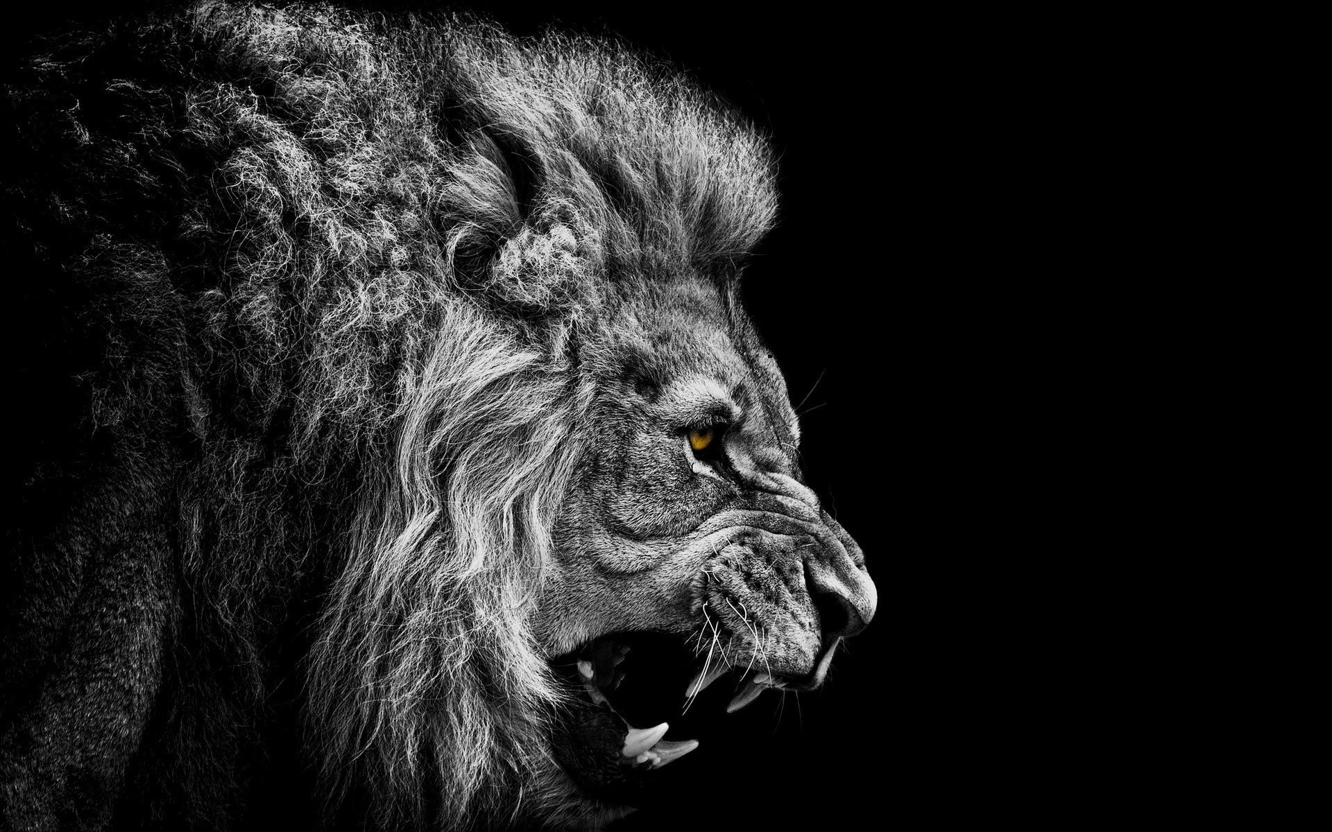Res: 1920x1200, 3D Roaring Lion Wallpaper | HD Animals and Birds Wallpaper Free Download ...