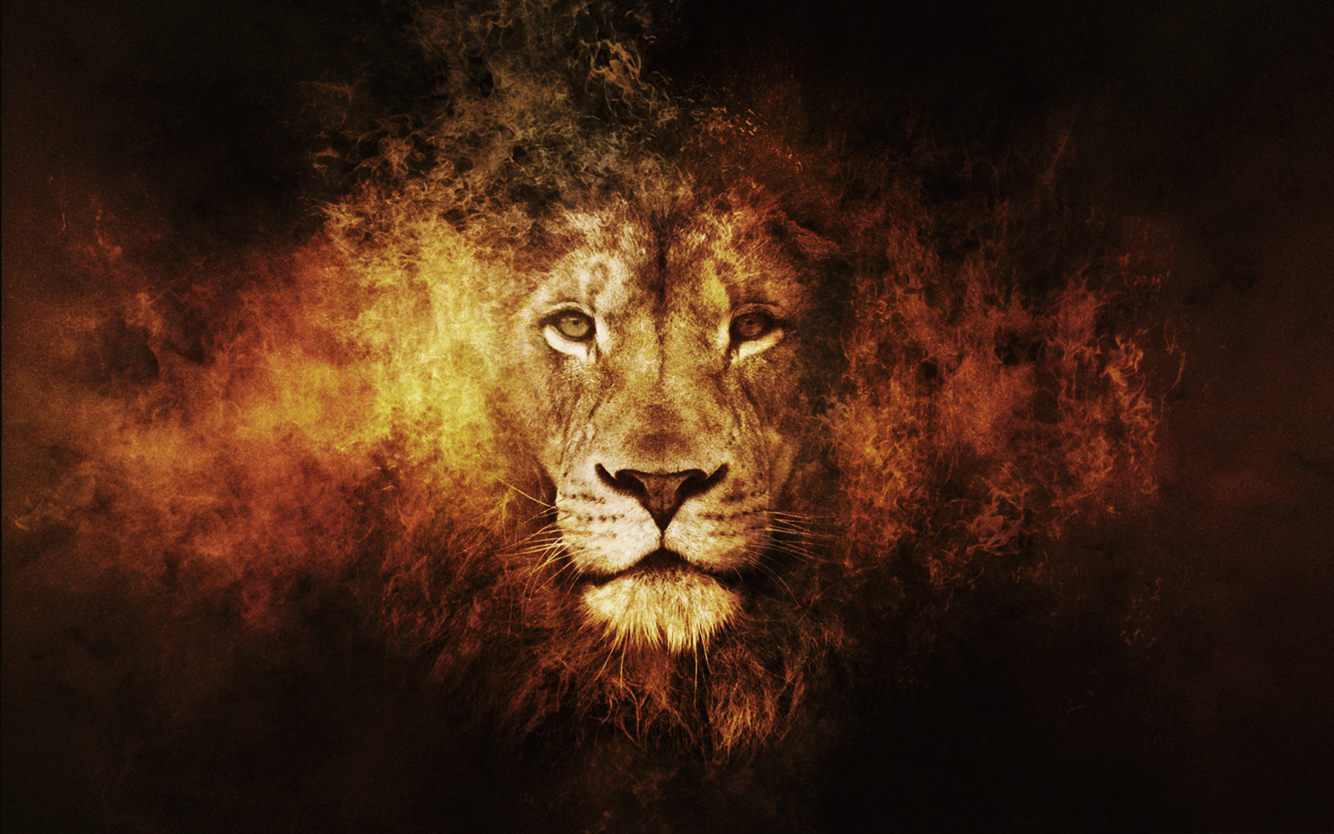 Res: 1920x1200, Lion High Quality Desktop Backgrounds