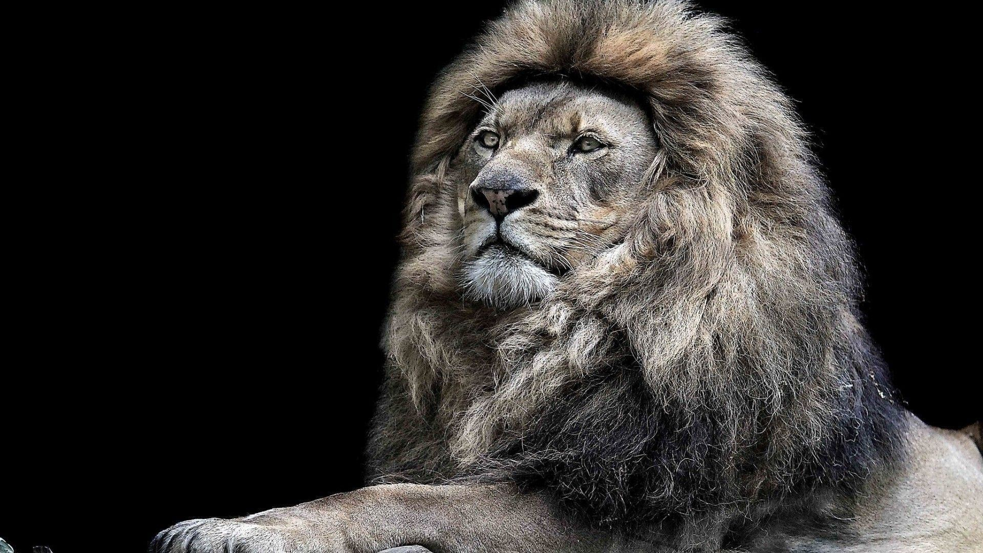 Res: 1920x1080, Animal Wallpapers. Download the following Roaring Lion ...