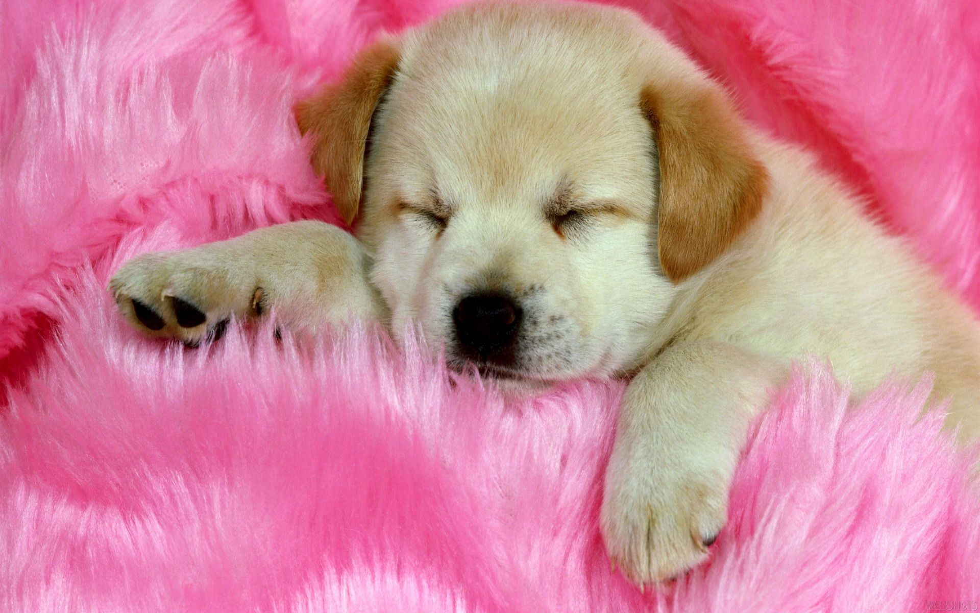 Res: 1920x1200,  Cute Dogs Computer Wallpapers, Wallpapers and Pictures – download  free