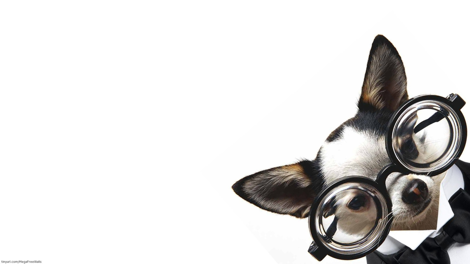Res: 1920x1080, Animal - Cute Dog Puppy Wallpaper