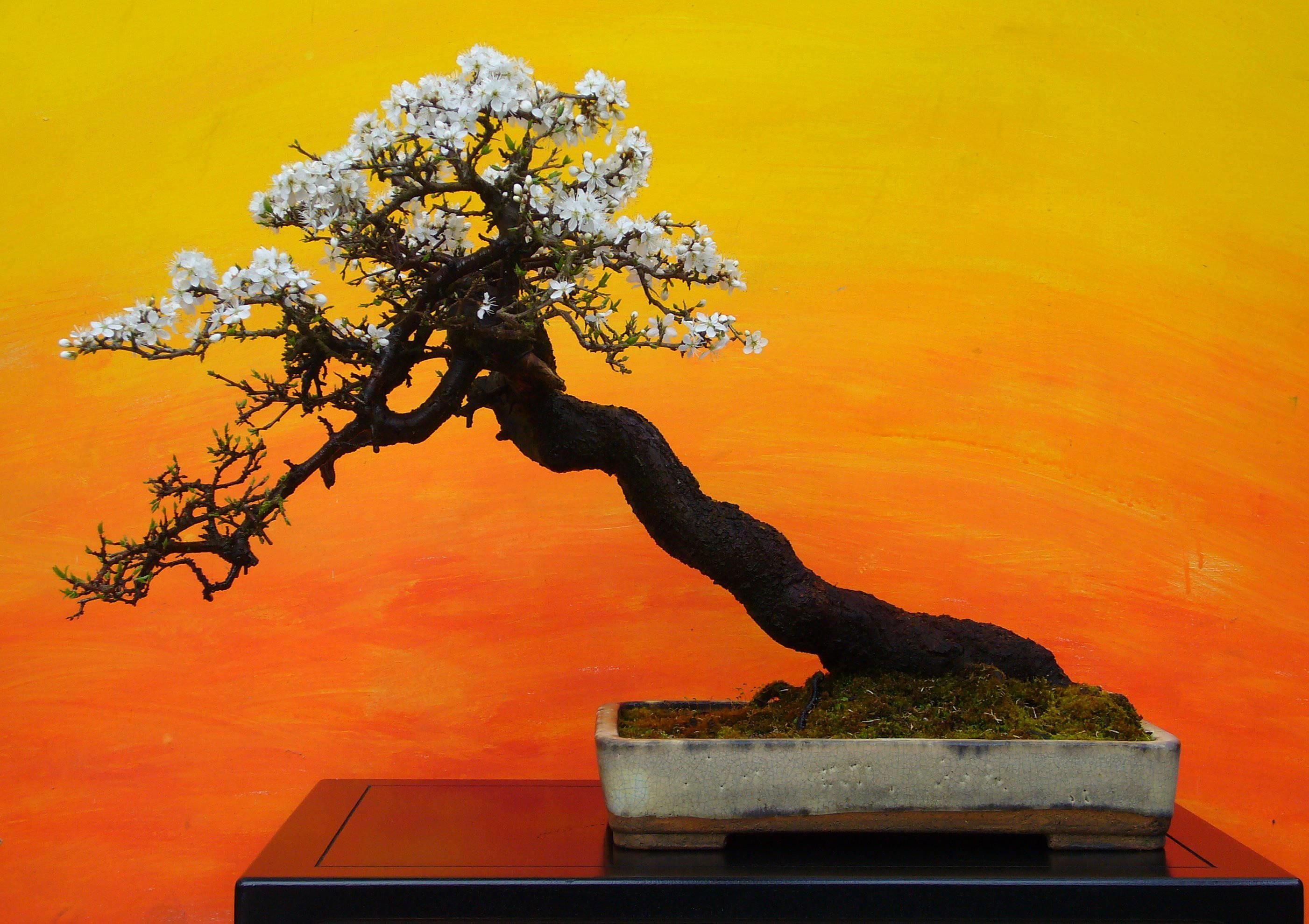 Res: 2803x1980, Red Flower Bonsai Wallpaper