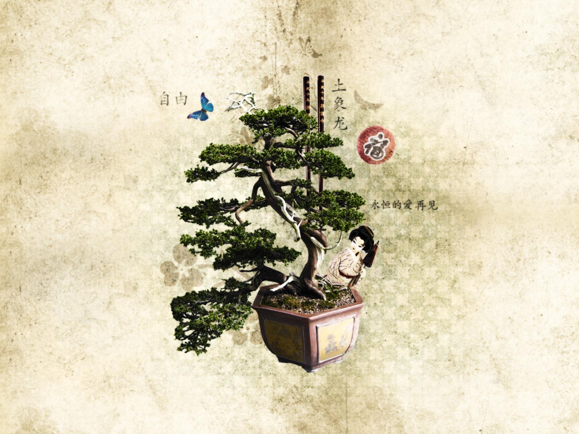 Res: 1920x1440, Bild: Schöne Bonsai wallpapers and stock photos. «