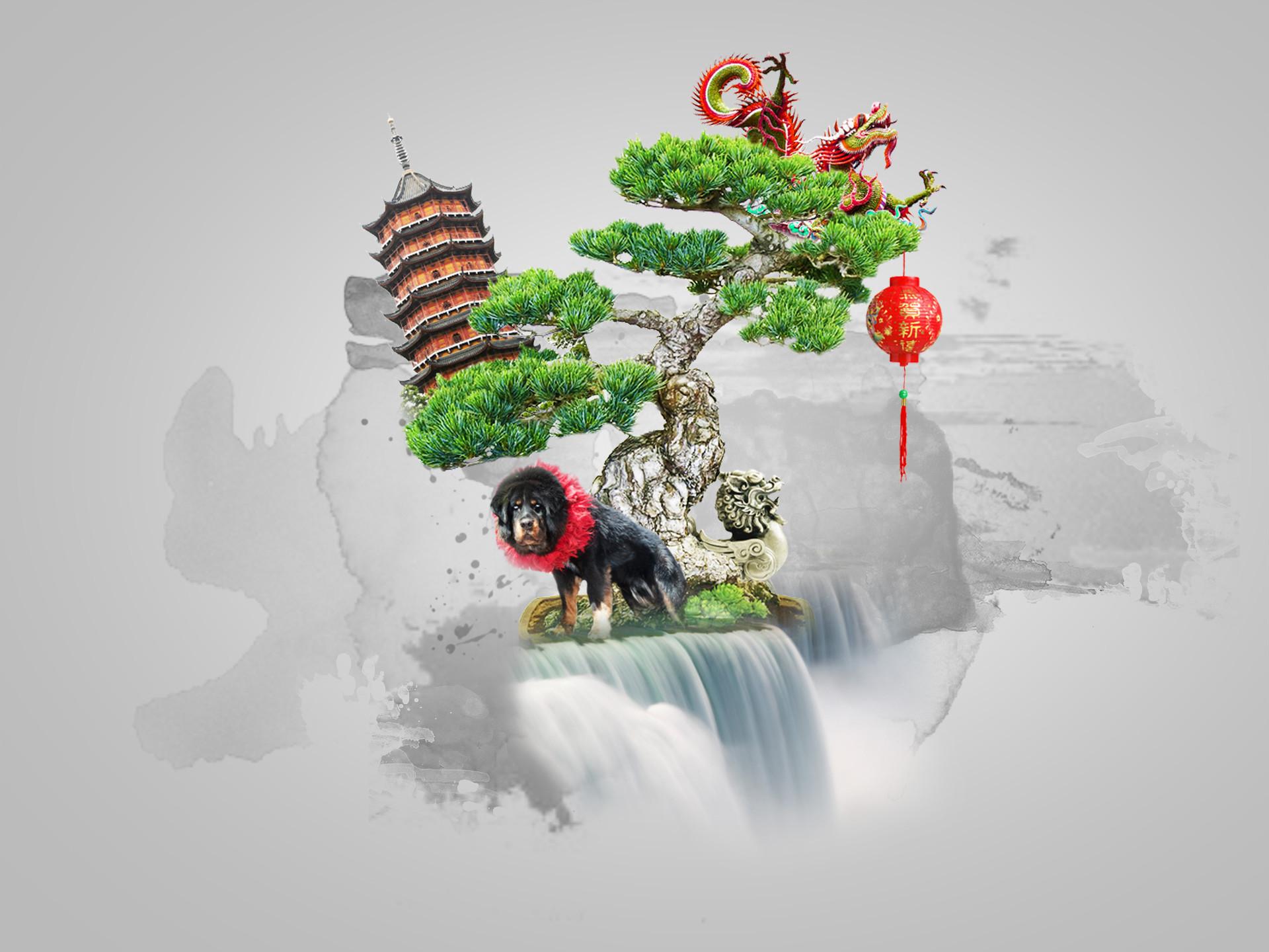Res: 1920x1440, Image: Bonsai wallpapers and stock photos. Â«