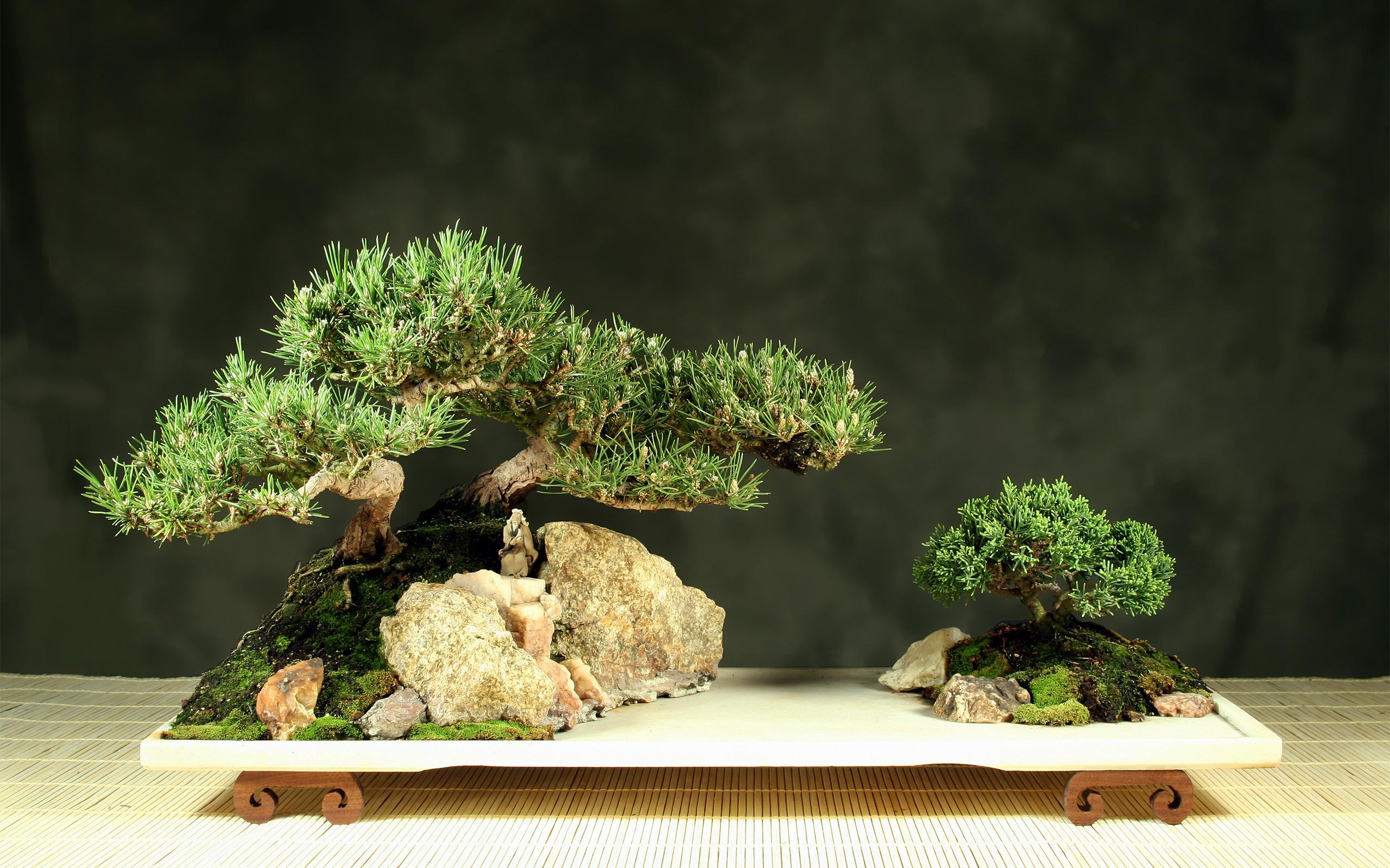 Res: 2560x1600, Bonsai Tree Wallpaper