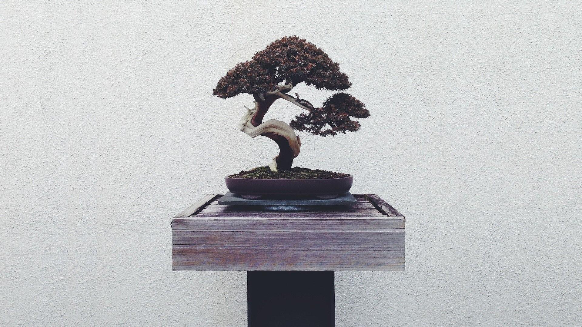 Res: 1920x1080, bonsai