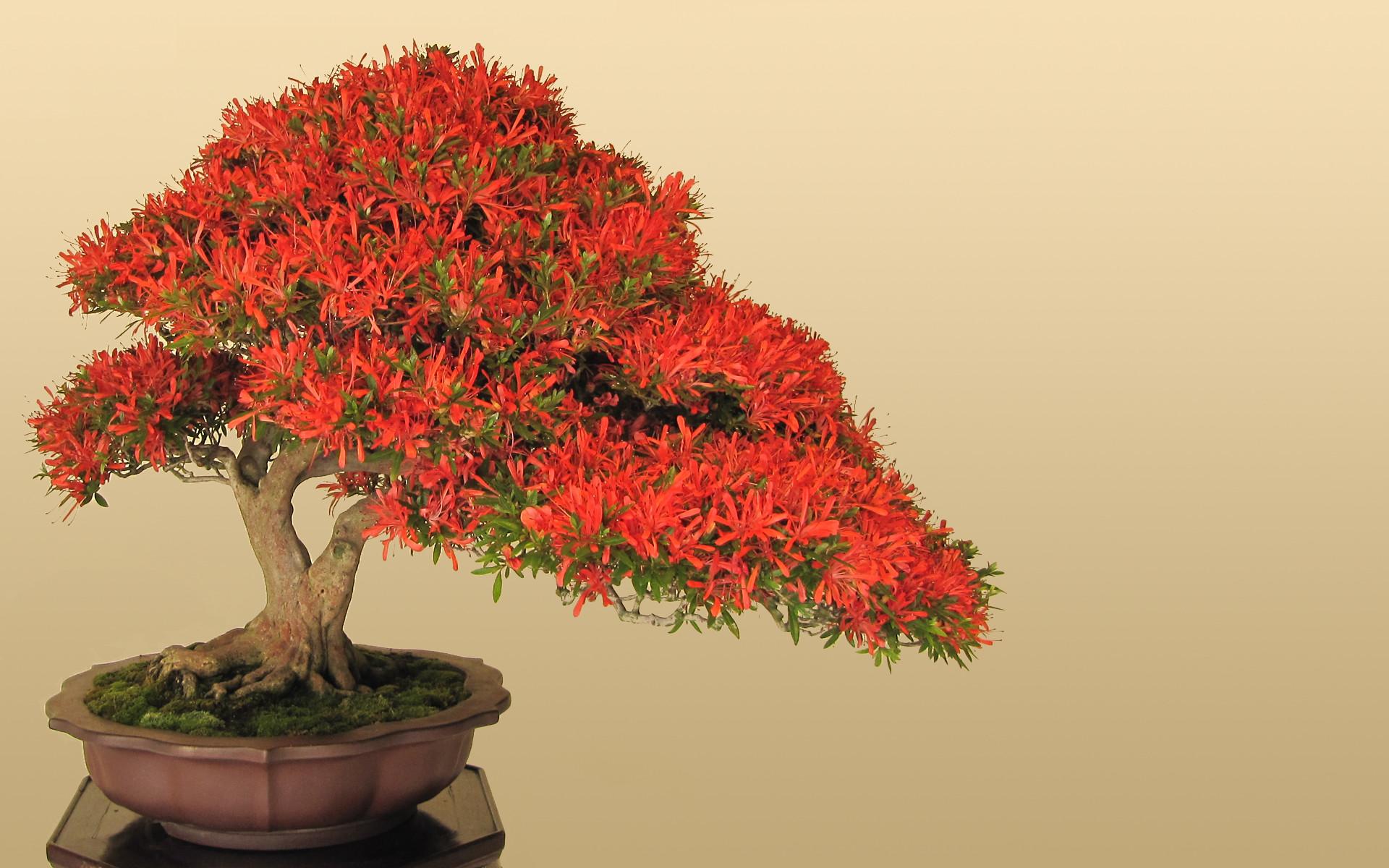 Res: 1920x1200, wallpaper Japan · bonsai