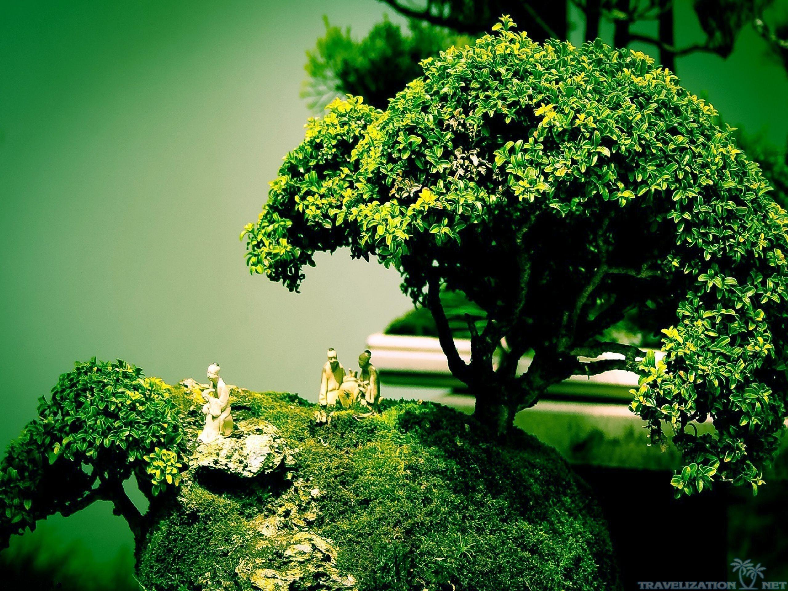 Res: 2560x1920, Bonsai Tree Wallpaper