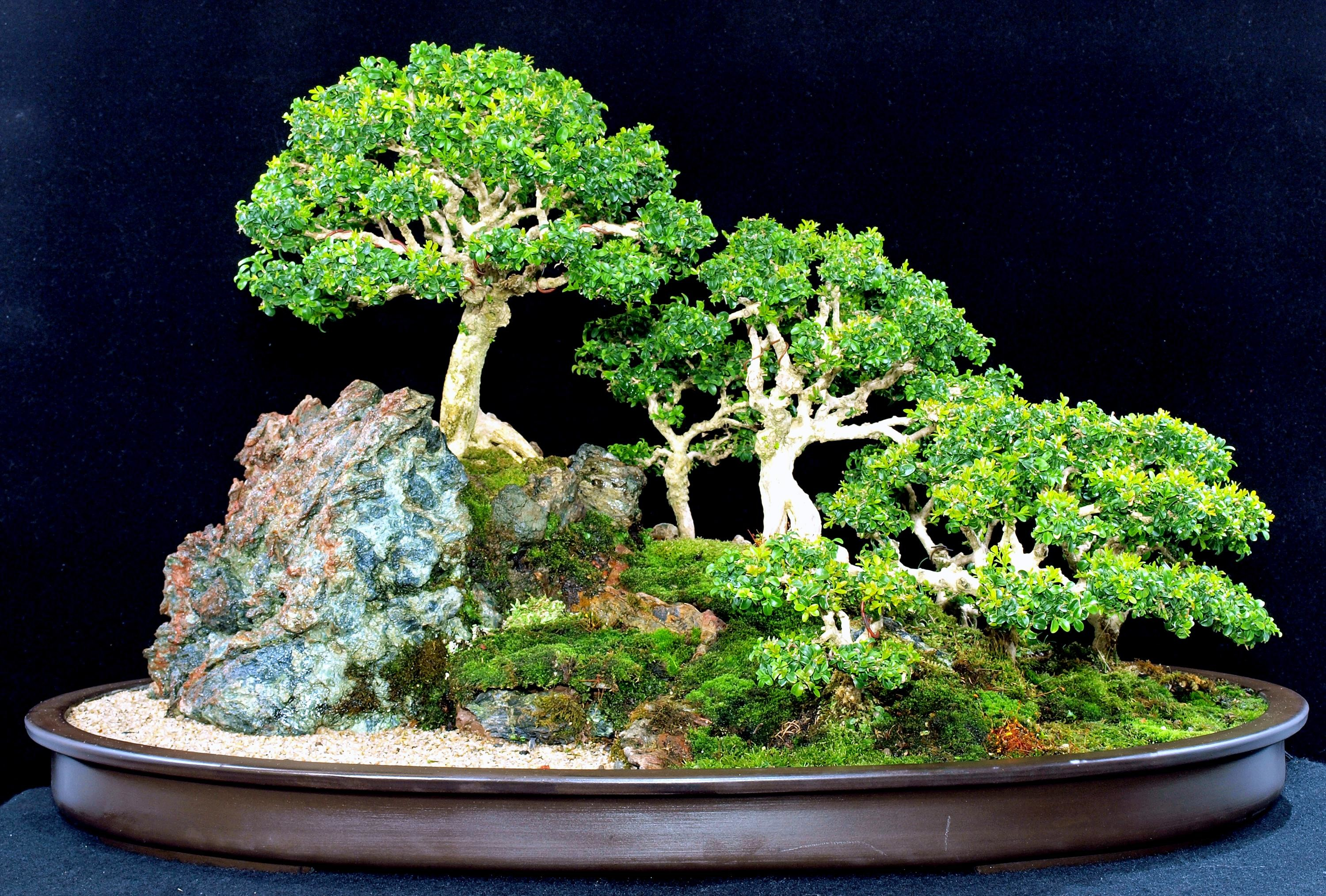 Res: 3000x2027, Bonsai wallpapers for android