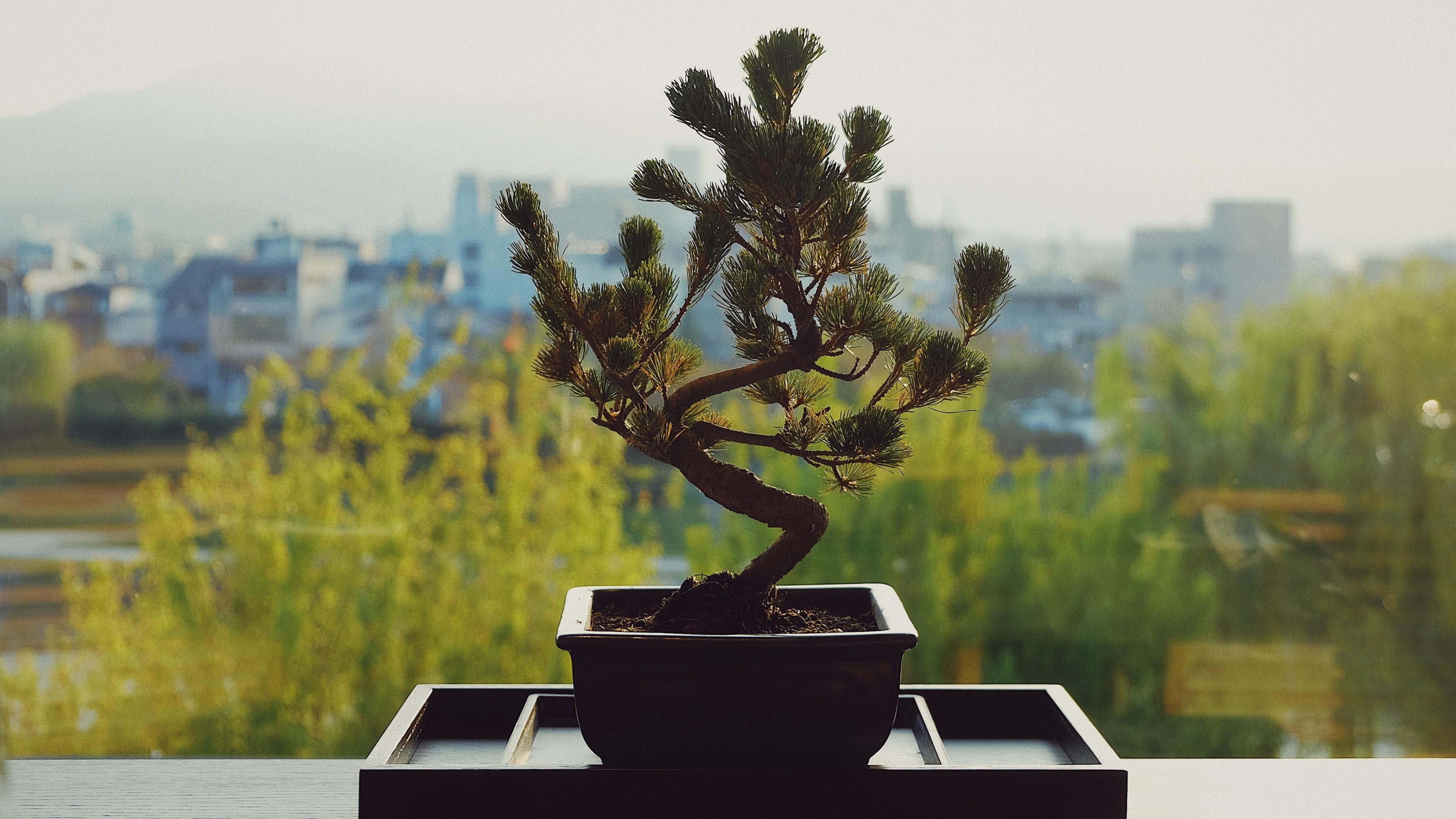 Res: 3840x2160,  Wallpaper bonsai, flower pot, flower