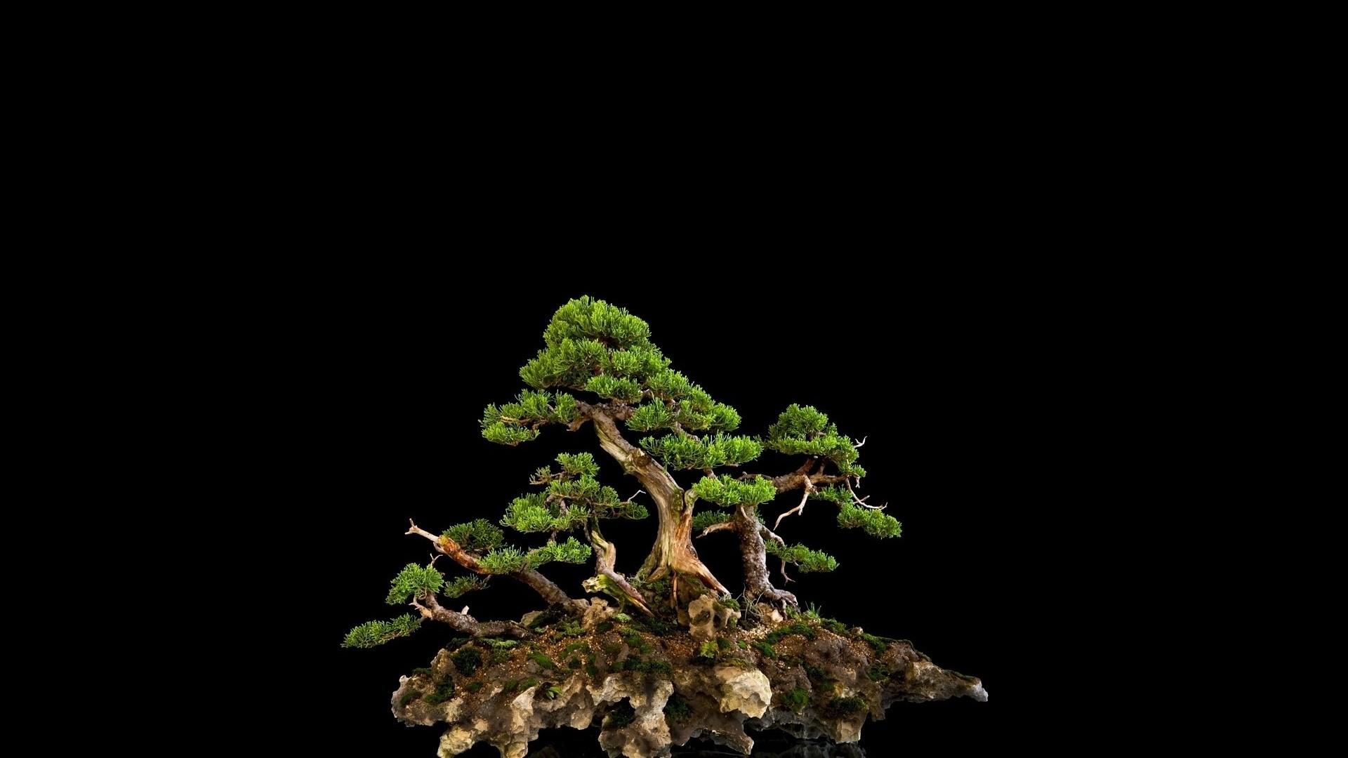 Res: 1920x1080, tree, bonsai, black background