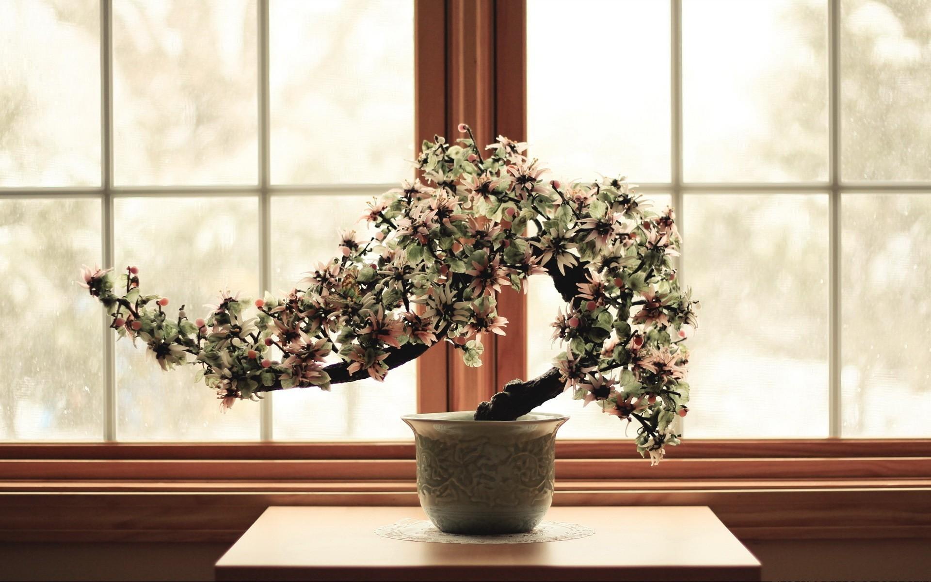 Res: 1920x1200, Flowers bonsai culture wallpaper