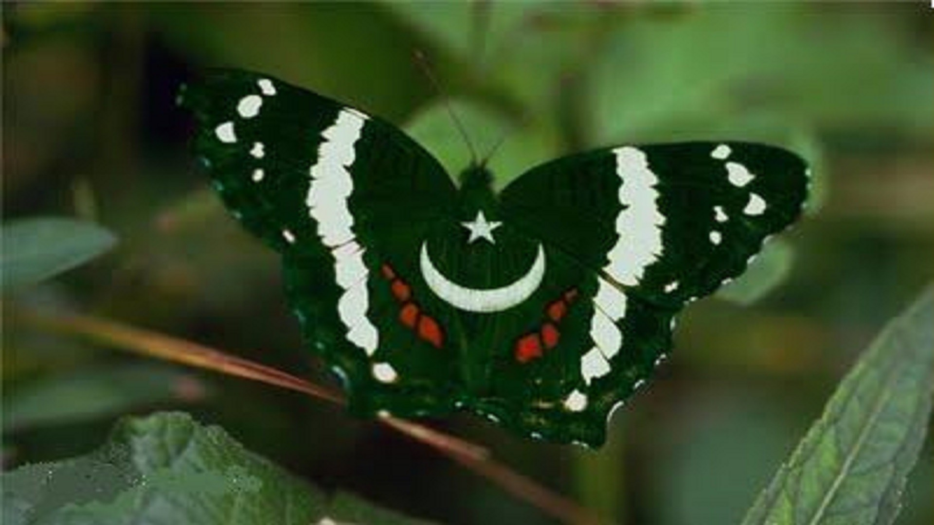 Res: 1920x1080, butterfly-pakistani-flag-wallpapers-hd-free