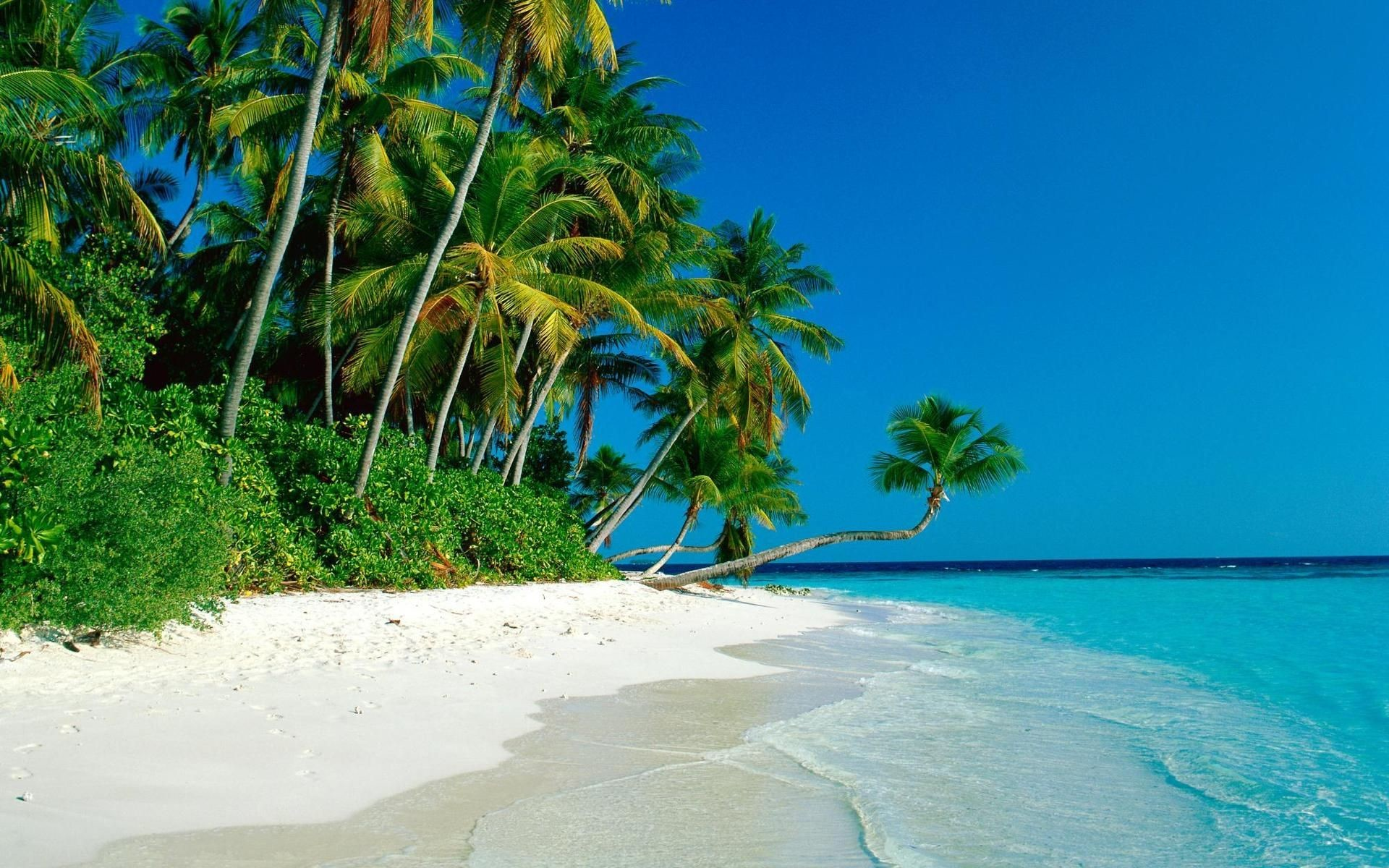 Res: 1920x1200, Tropical Island Wallpaper - http://whatstrendingonline.com/tropical-island- wallpaper/