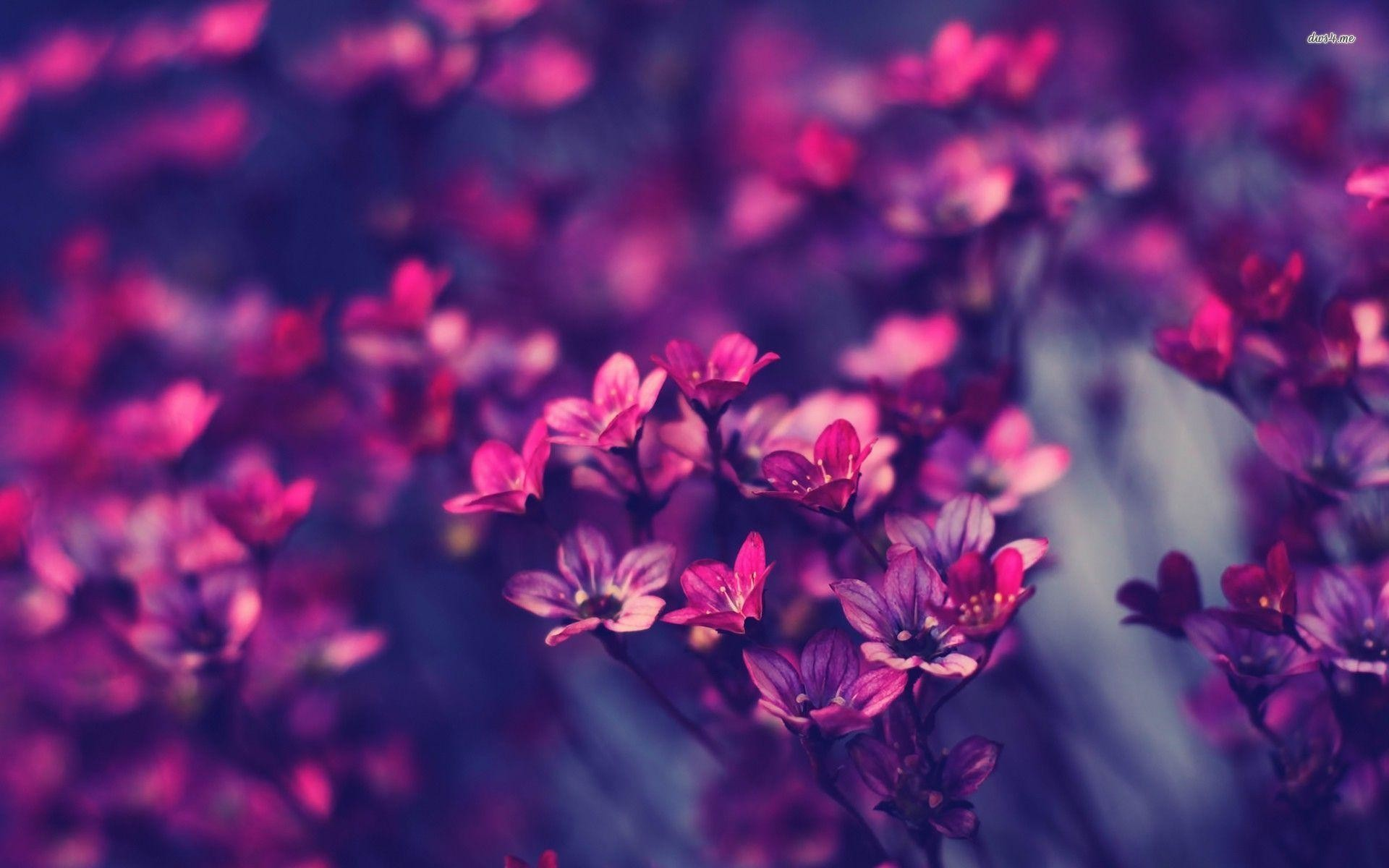 Res: 1920x1200, Violet Wallpapers - Full HD wallpaper search - page 3