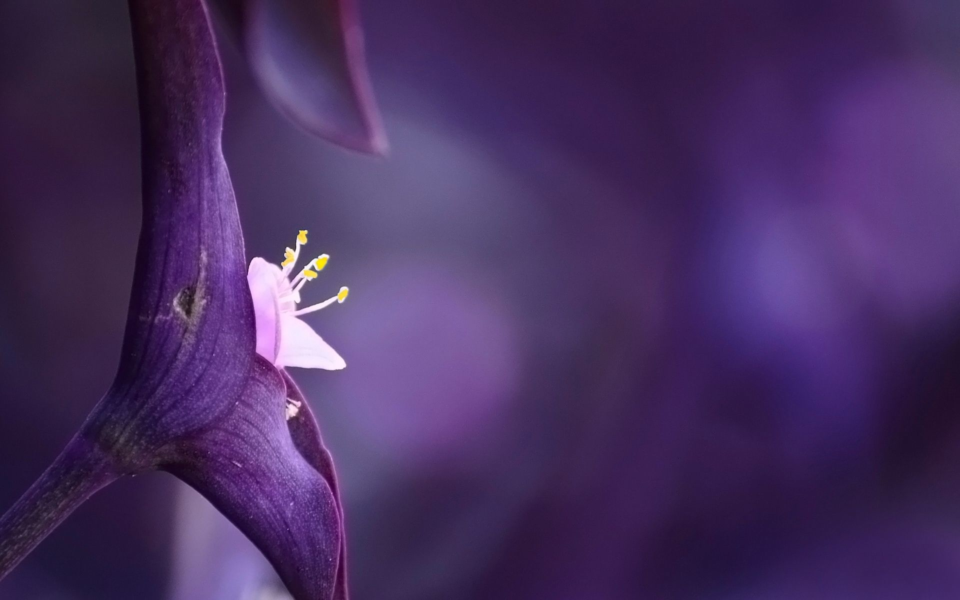 Res: 1920x1200, violet flower images and wallpapers Download
