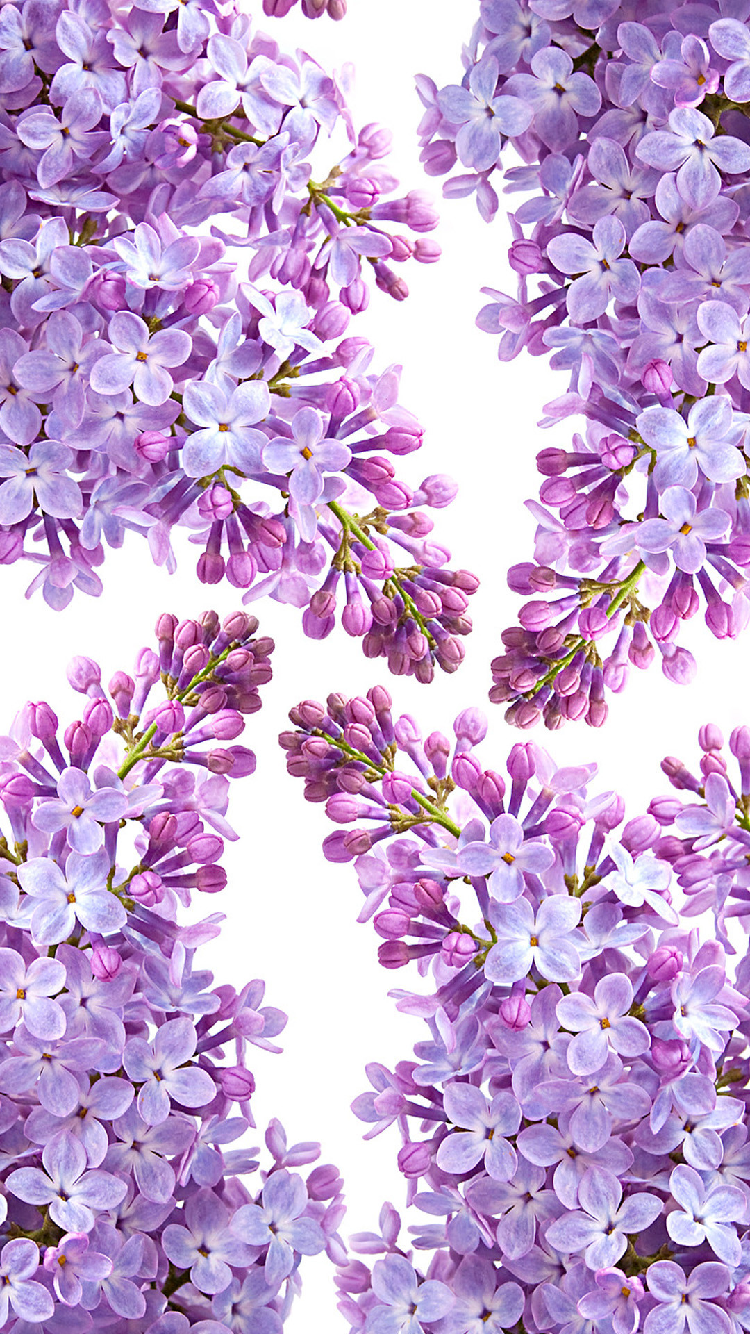 Res: 1080x1920, Lilac | Live HD Lilac Wallpapers, Photos