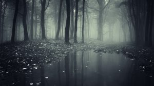 Scary Forest wallpapers