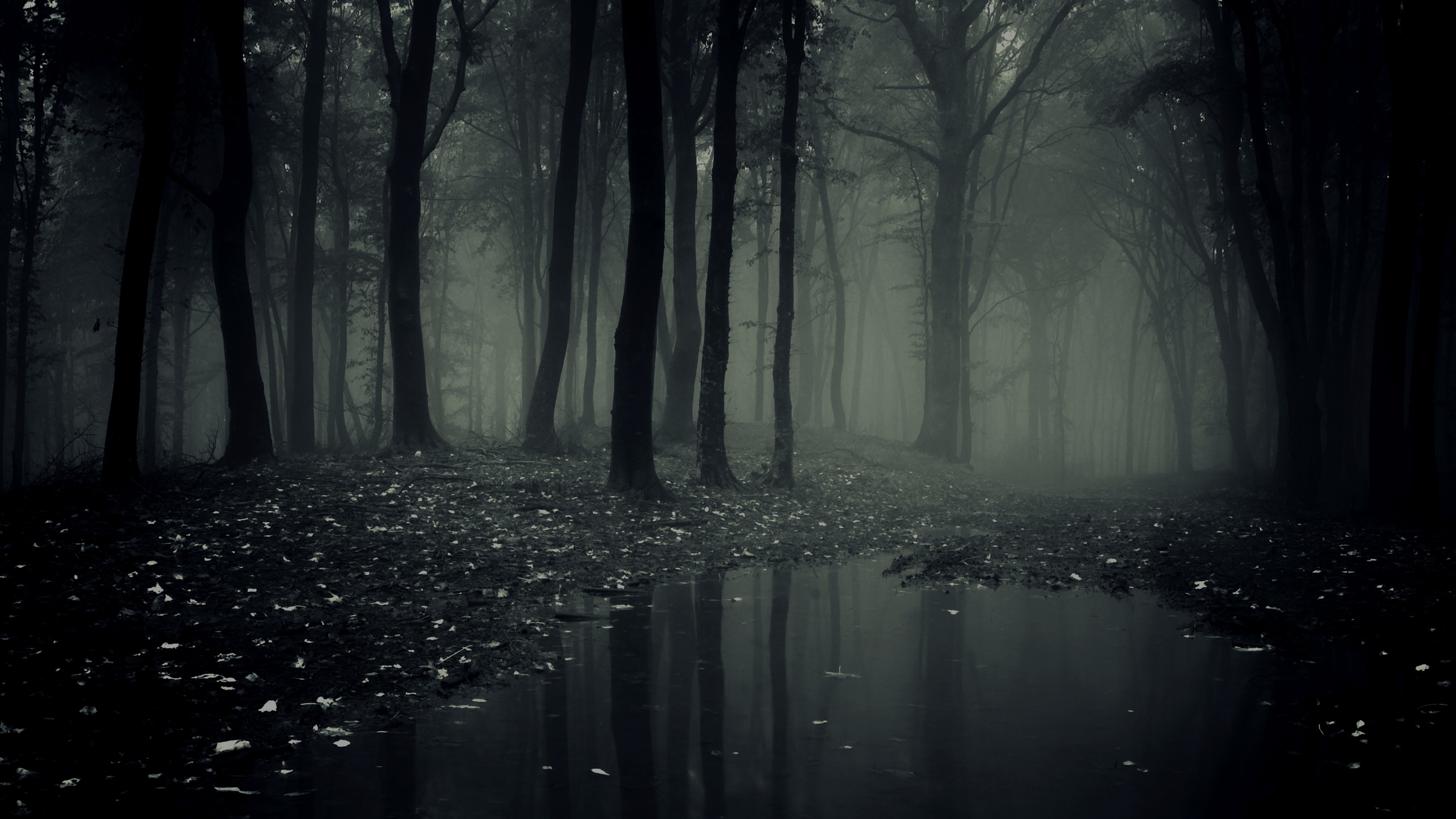 Res: 3840x2160, Nature Wallpapers. Download the following Scary Forest ...
