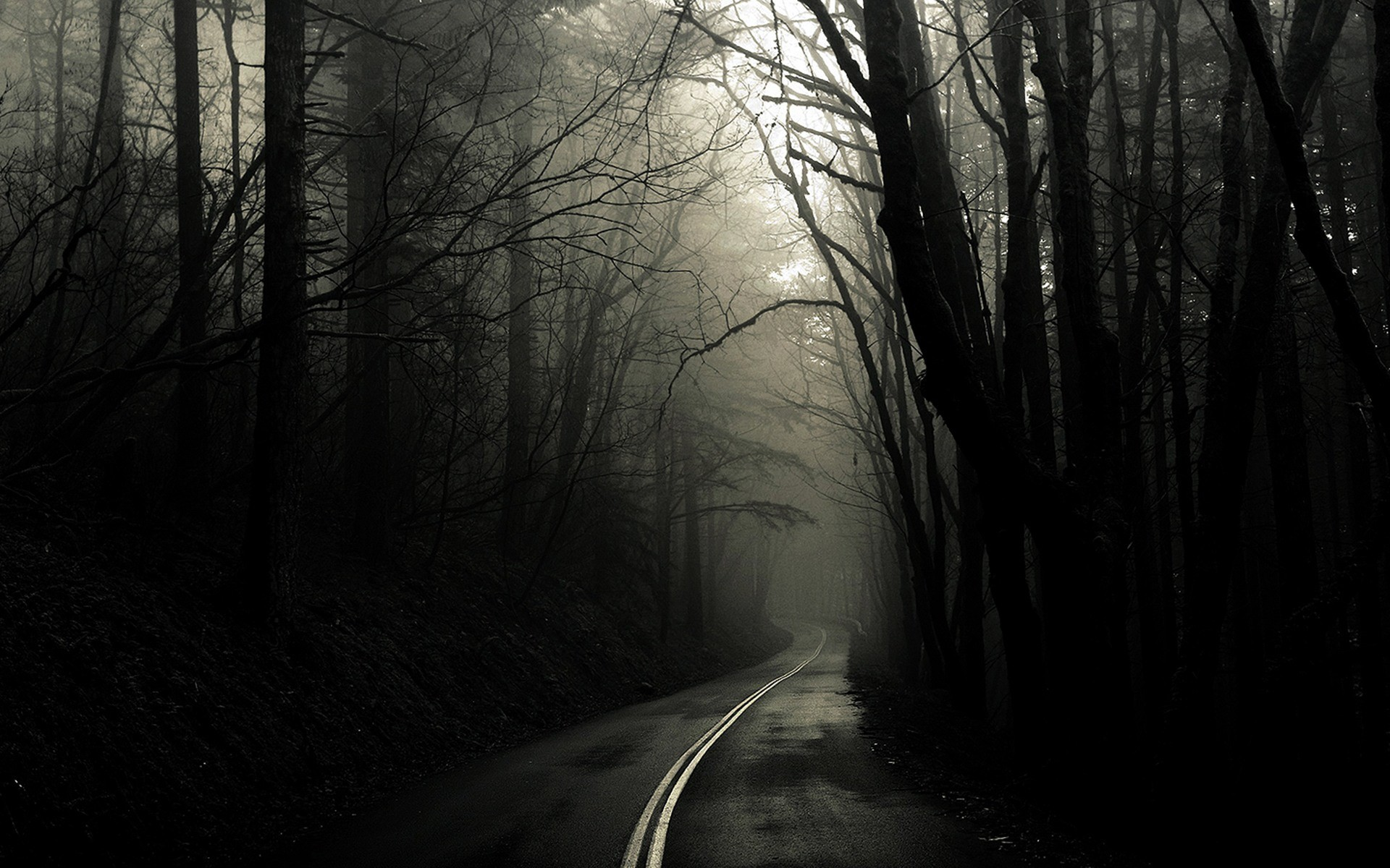 Res: 1920x1200, Nature Wallpapers. Download the following Scary Forest ...