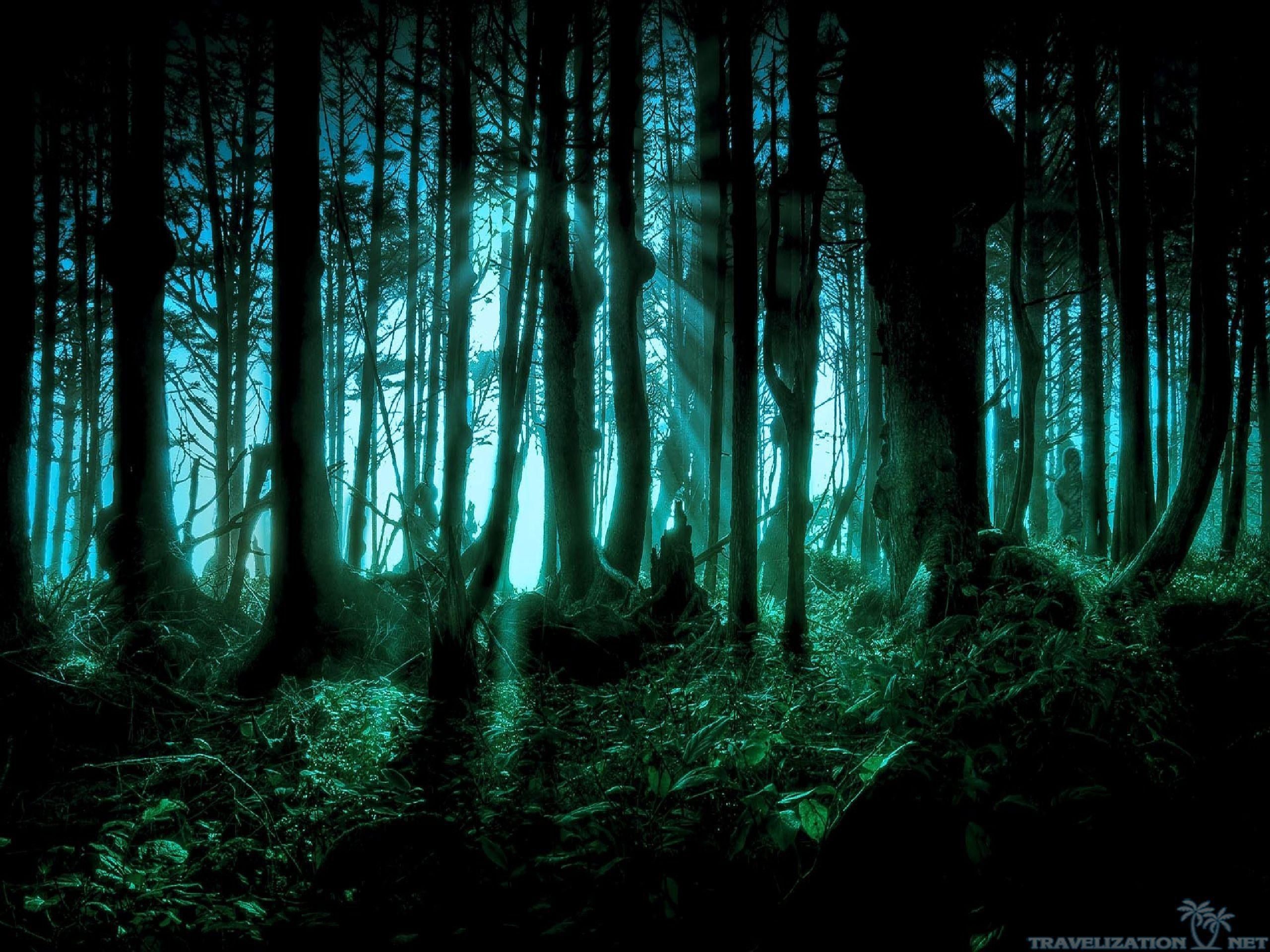 Res: 2560x1920, creepy-forest-wallpapers-background.jpg (2560×1920)