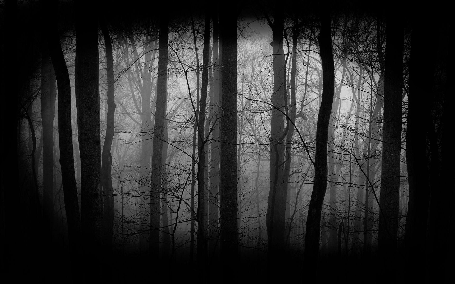 Res: 1920x1200, Dark Forest