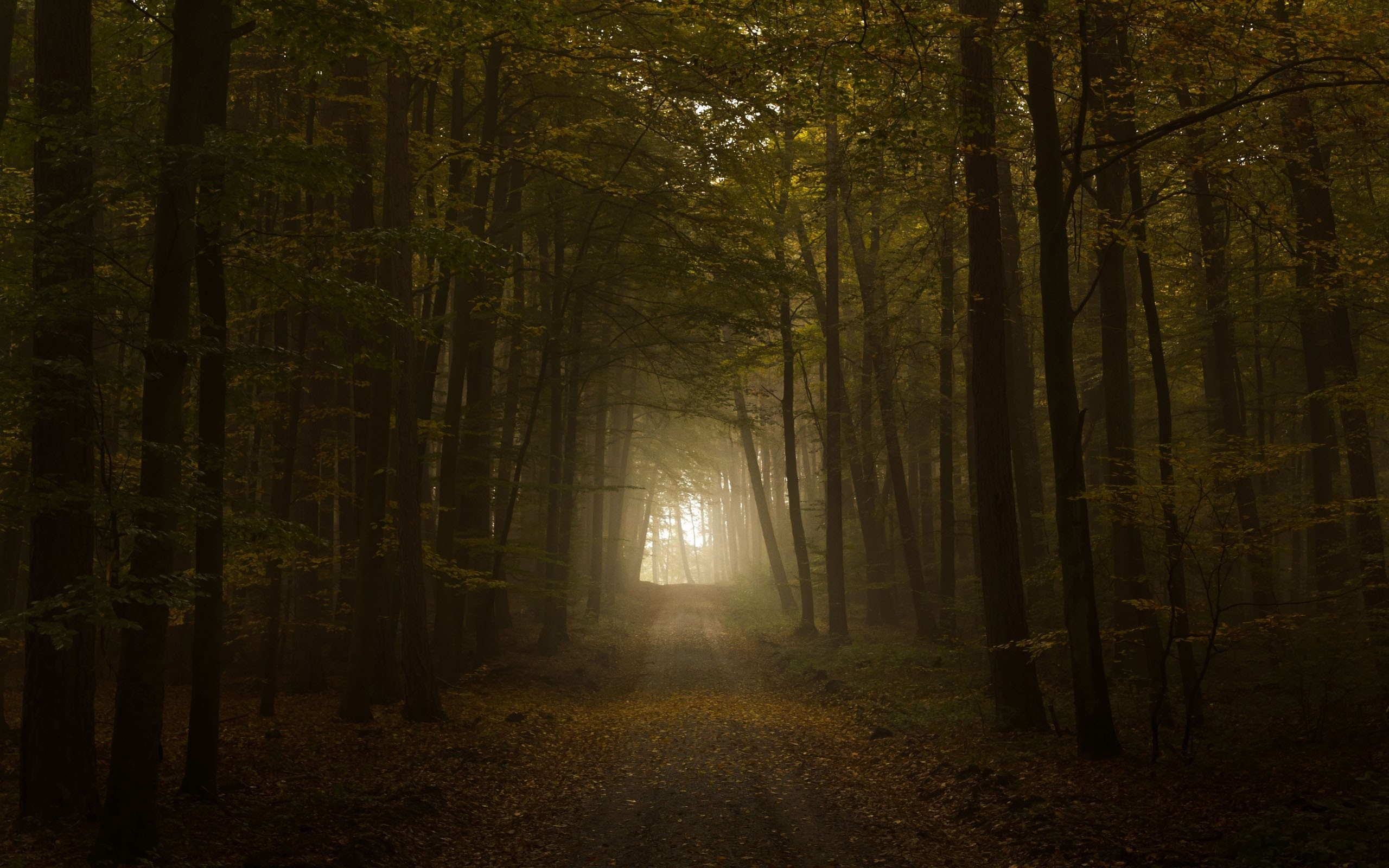 Res: 2560x1600, Nature Wallpapers. Download the following Scary Forest ...