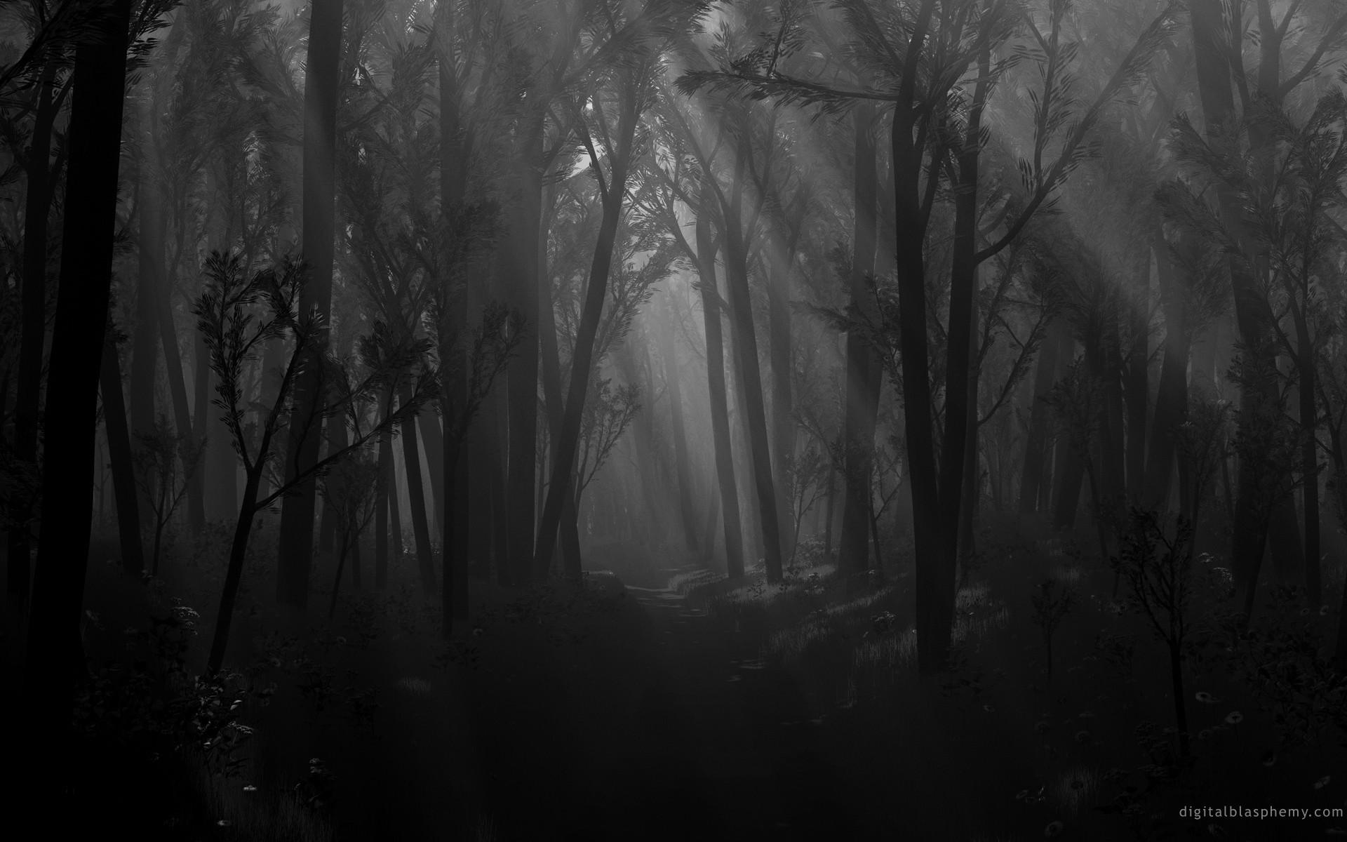 Res: 1920x1200, Dark Forest Wallpaper