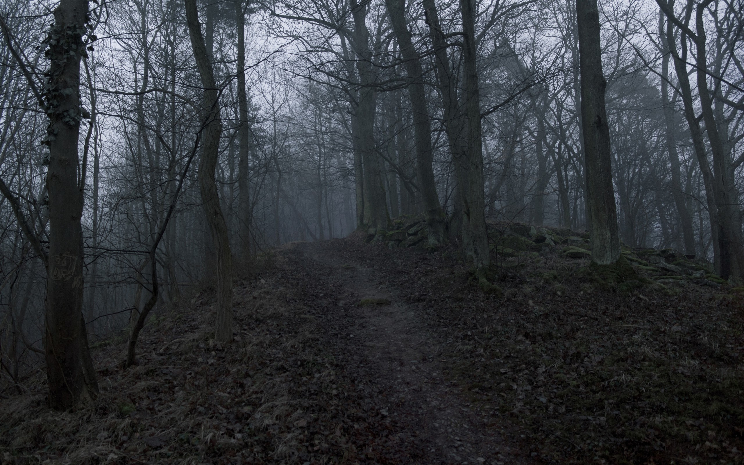 Res: 2560x1600, Black Path Trees Scary Forest Leaves Mist Dark HD Pics