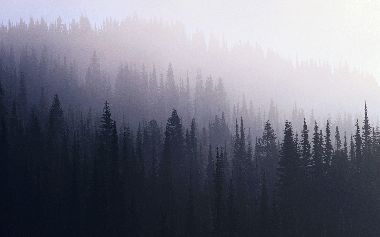 Res: 2880x1800, Dark Forest Wallpaper Hd