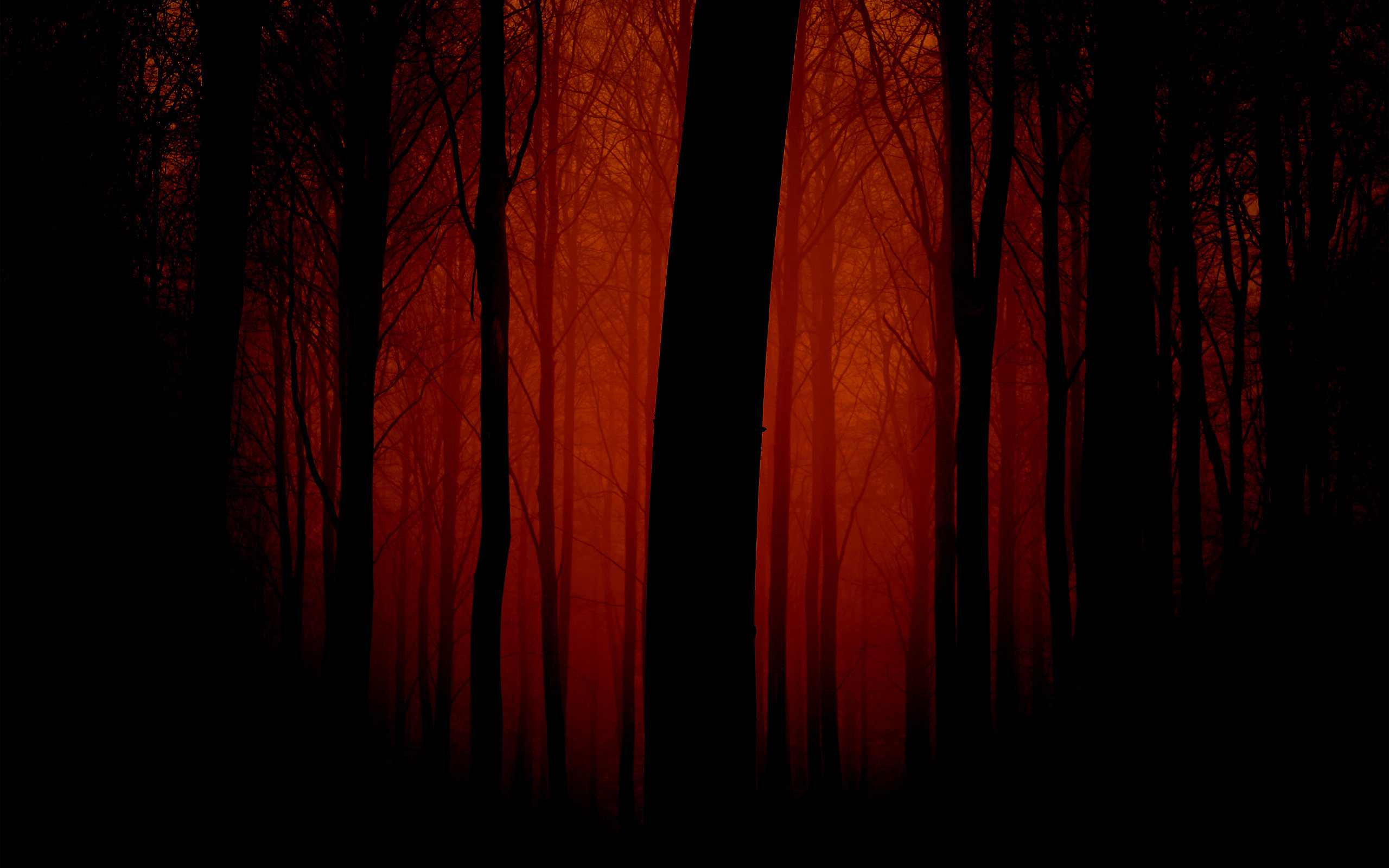 Res: 2560x1600, Scary Forest Wallpaper 52