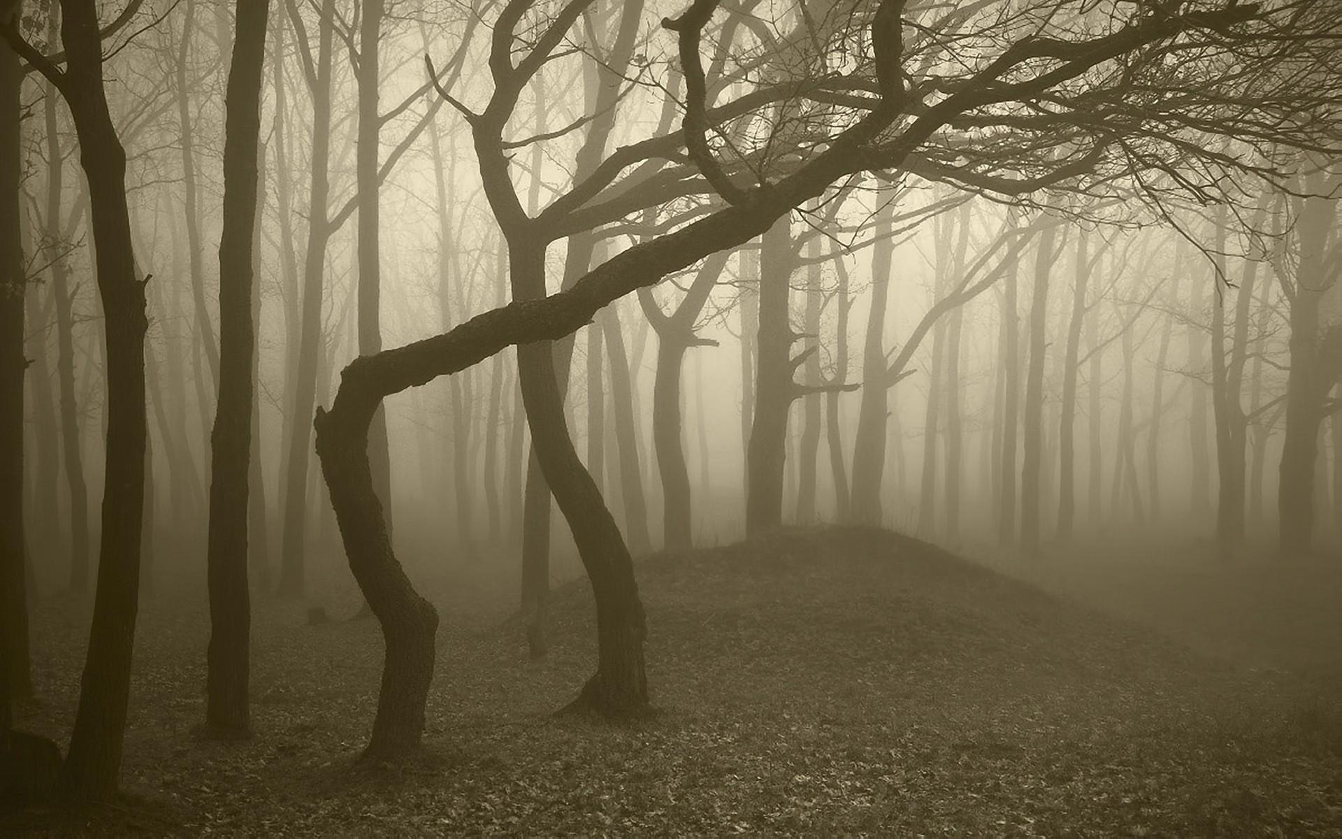 Res: 1920x1200, Photos Foggy Forest HD.