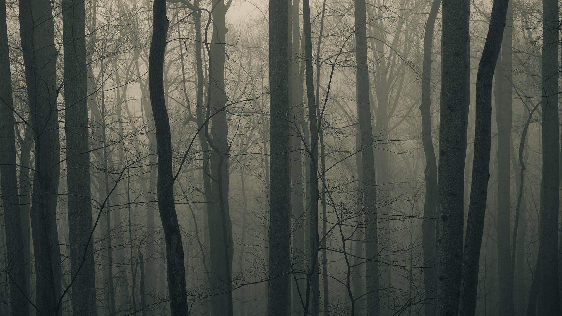 Res: 1920x1080, Full HD Photos Dark Forest HD 2163.91 Kb