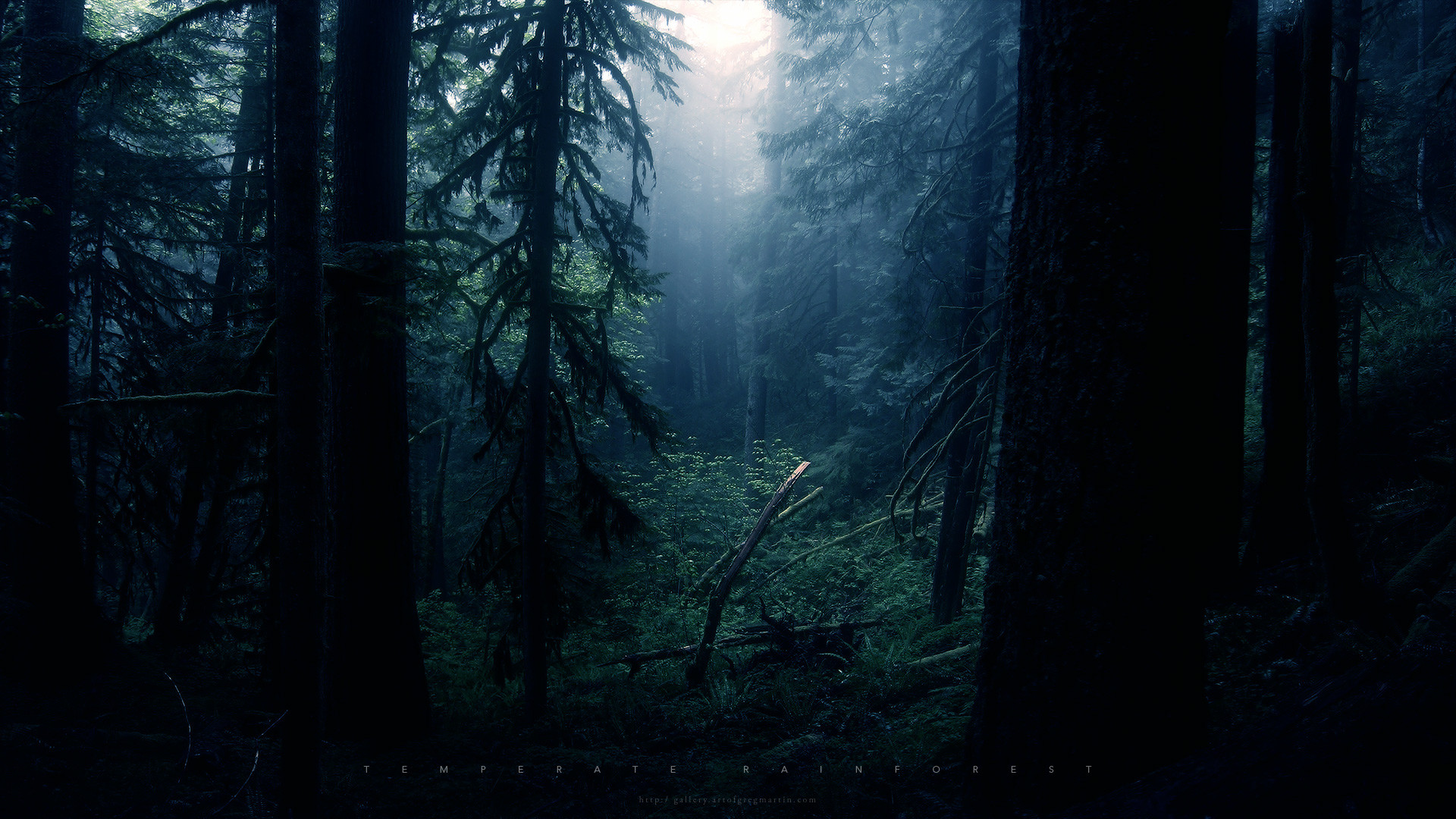 Res: 1920x1080, Hd Wallpapers Scary Forest At Night 7756 Wallpaper Wallpaper hd