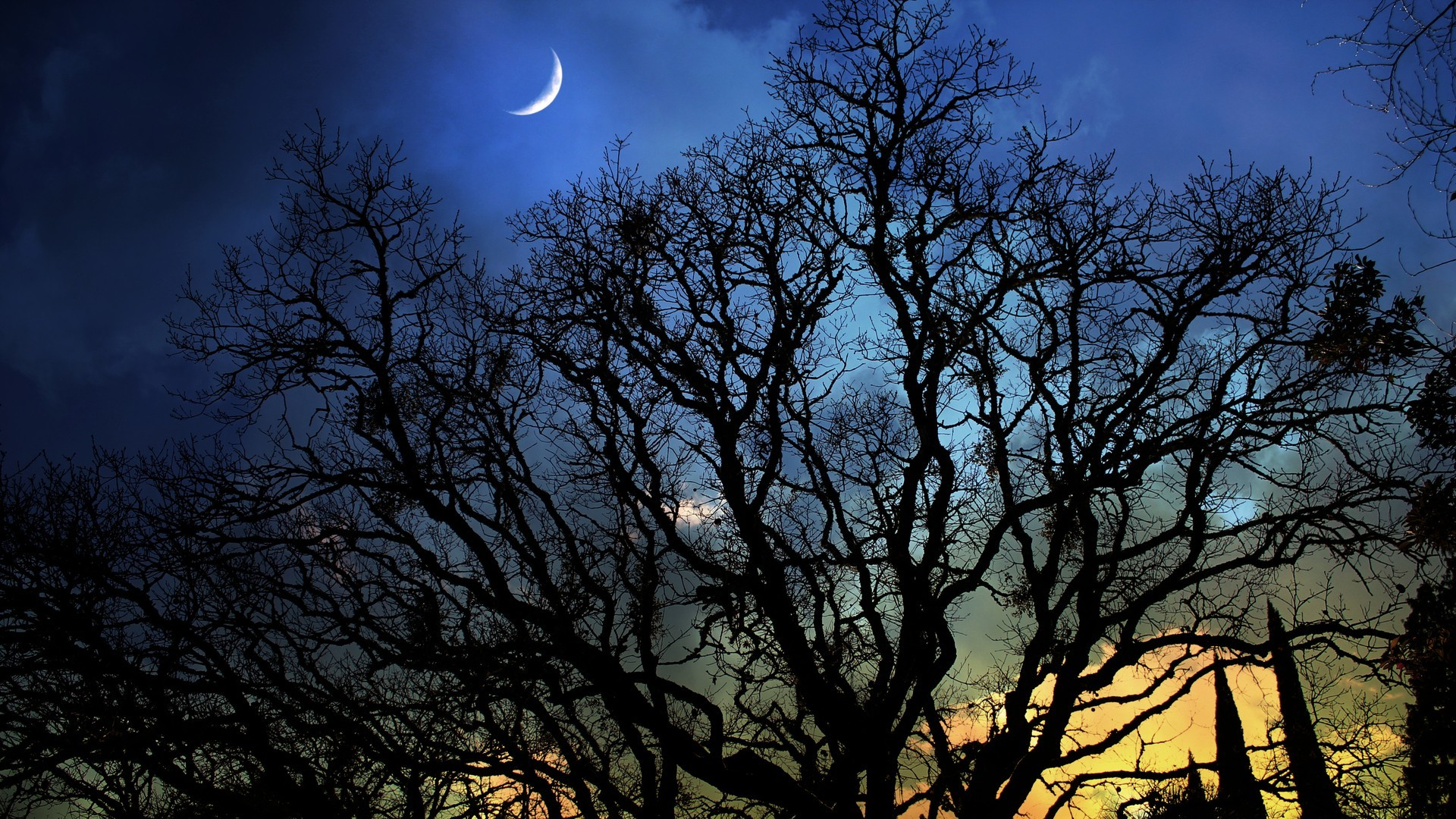 Res: 1920x1080, Scary Forest Quarter Moon Branches Dusk Trees Photo Gallery