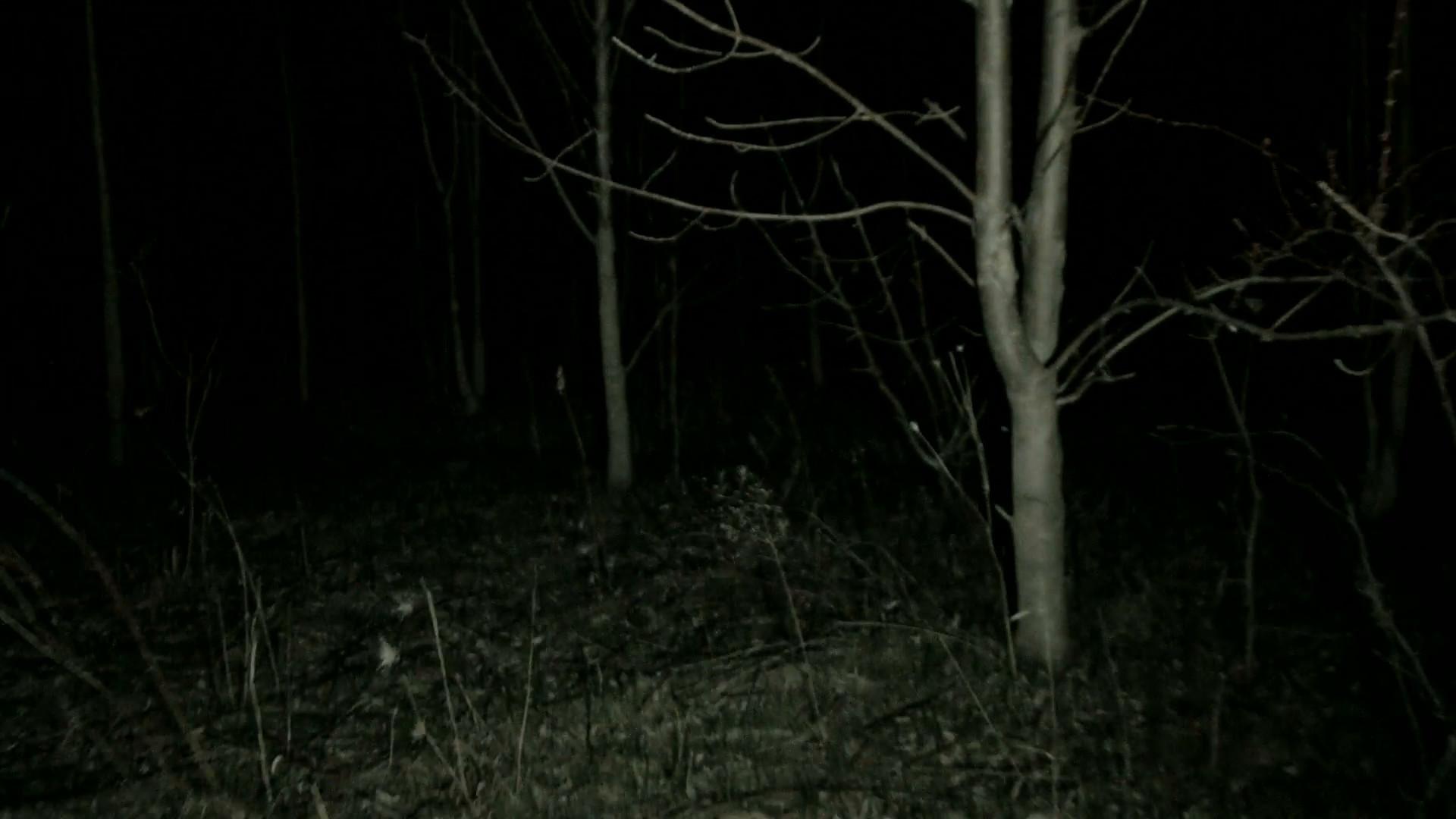 Res: 1920x1080, POV steadicam walking/running through dark spooky forest at night Stock  Video Footage - Videoblocks