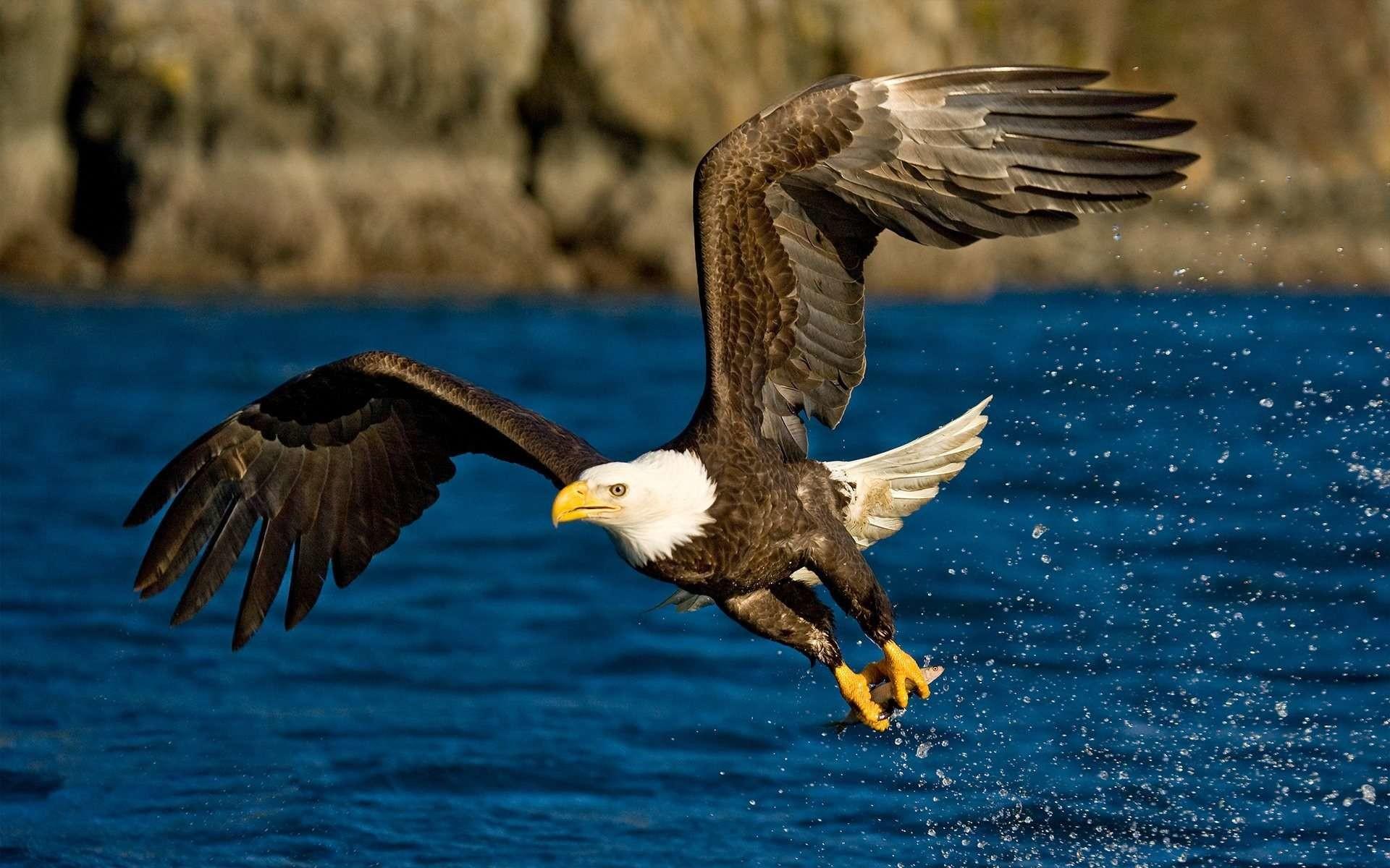 Res: 1920x1200, Birds Wallpaper. Download the following Eagles Desktop ...