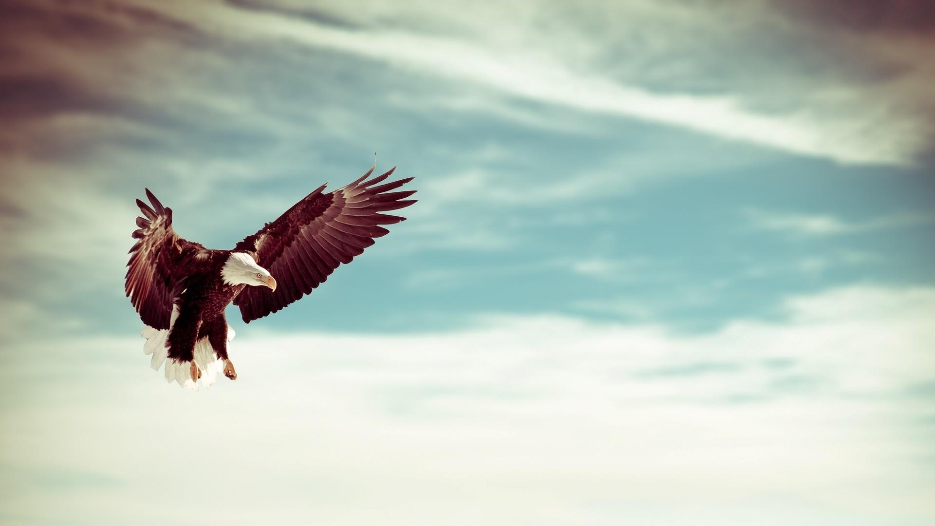 Res: 1920x1080, Eagles Desktop Wallpaper