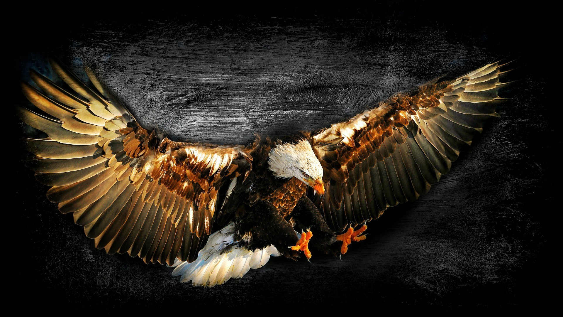 Res: 1920x1080, Bald eagle work of art wallpaper