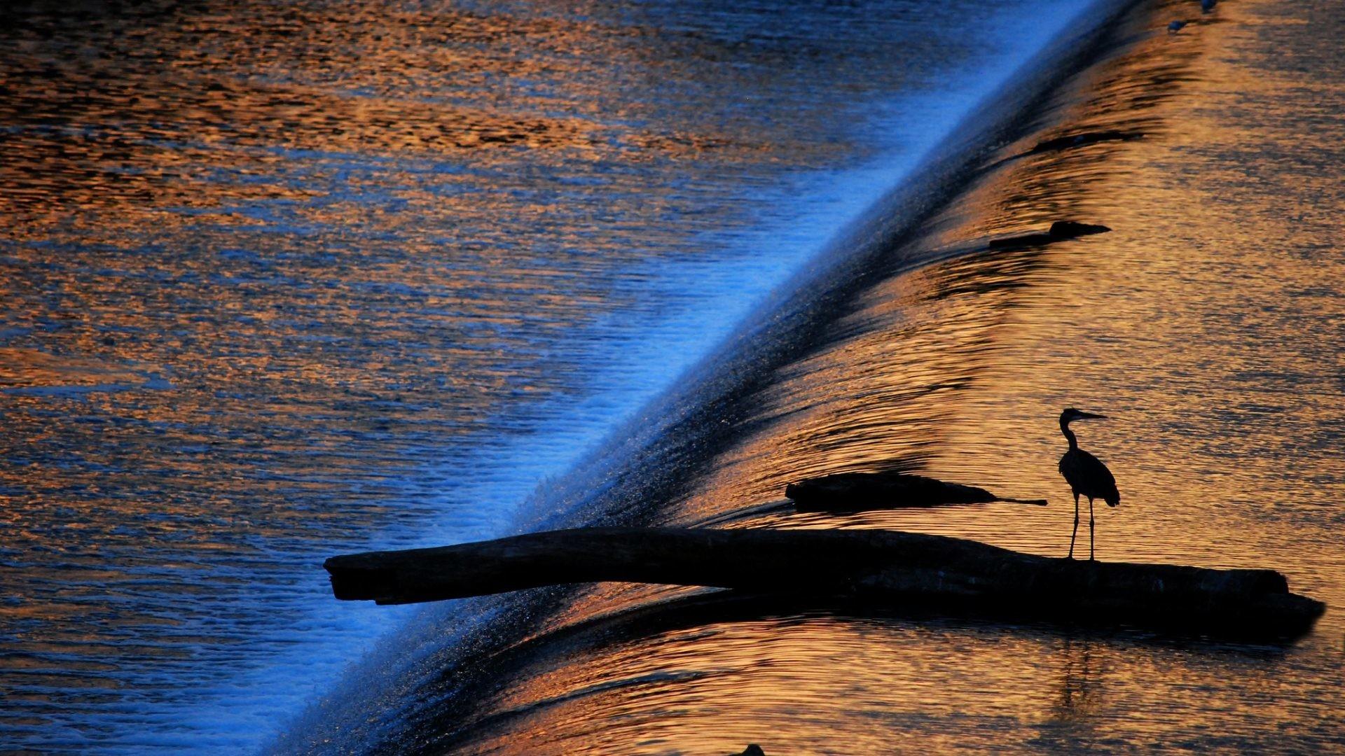 Res: 1920x1080, Stream Reflection Bird Heron Mood Sun Game Water Waterfall Silhouette Light  Wallpaper Image