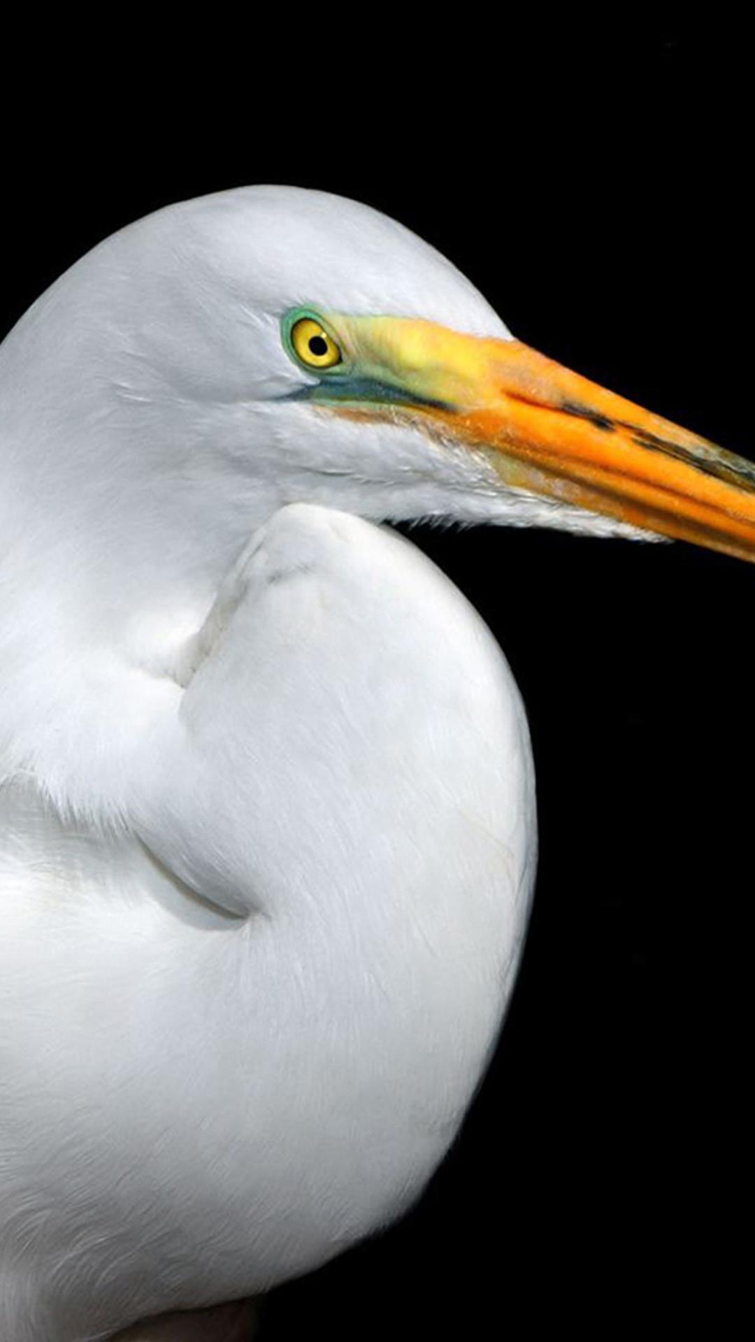 Res: 1080x1920, White heron Sony Xperia Z2 Wallpapers